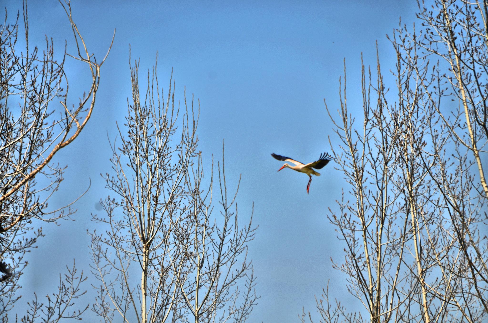 stork landing by Jorge Alonso