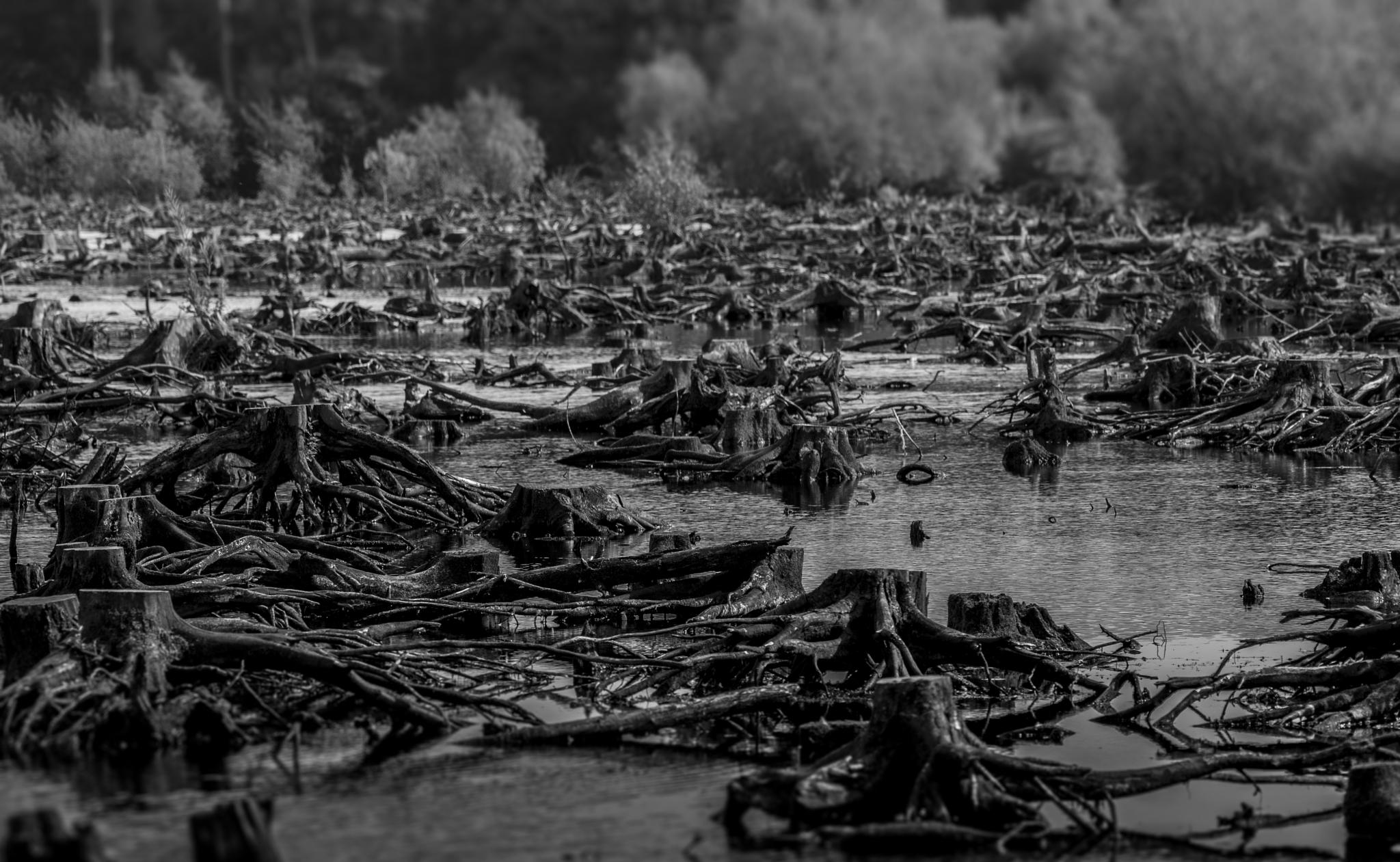 Deforestation by charliedapper