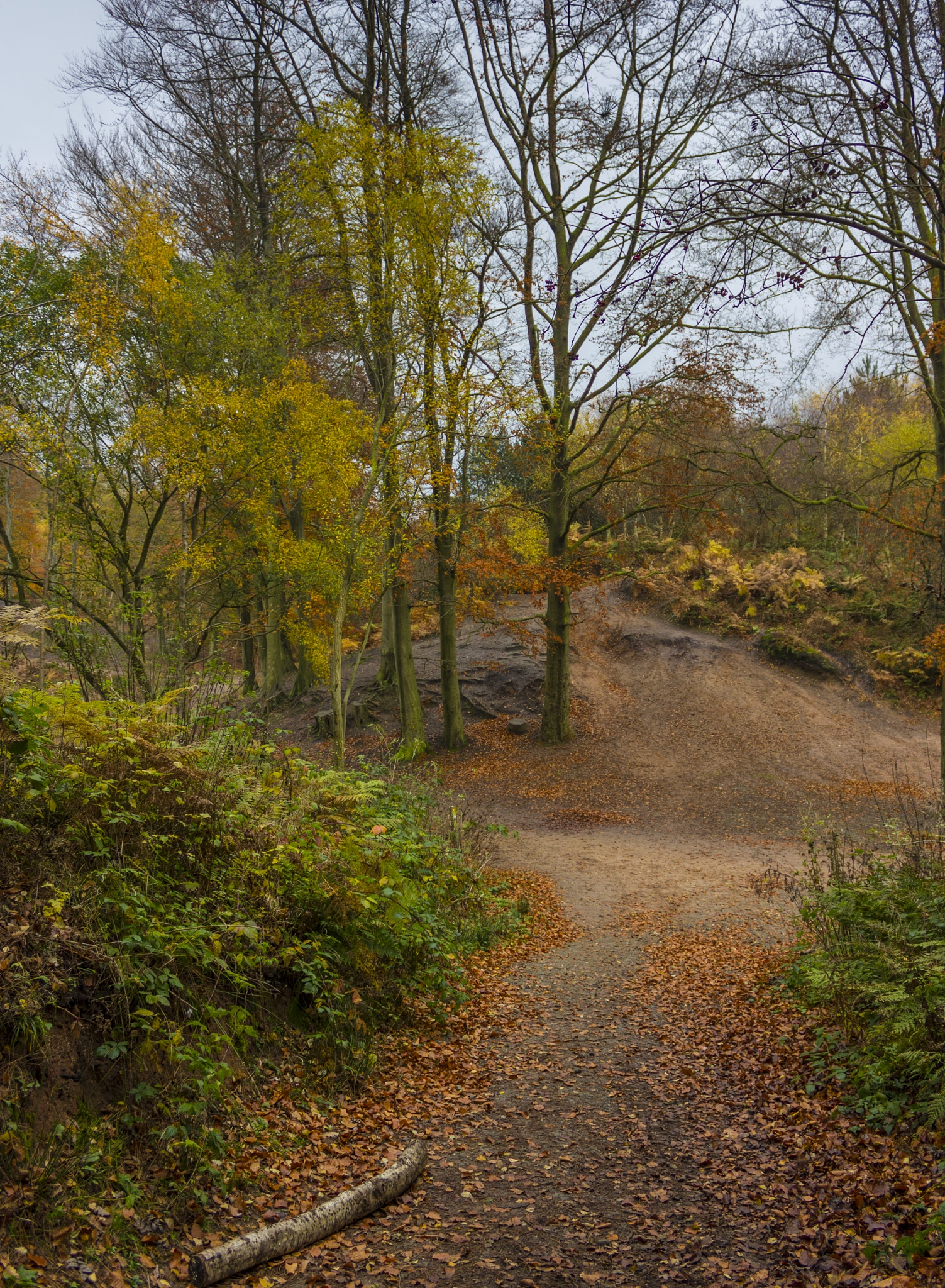 Sandstone trail by charliedapper