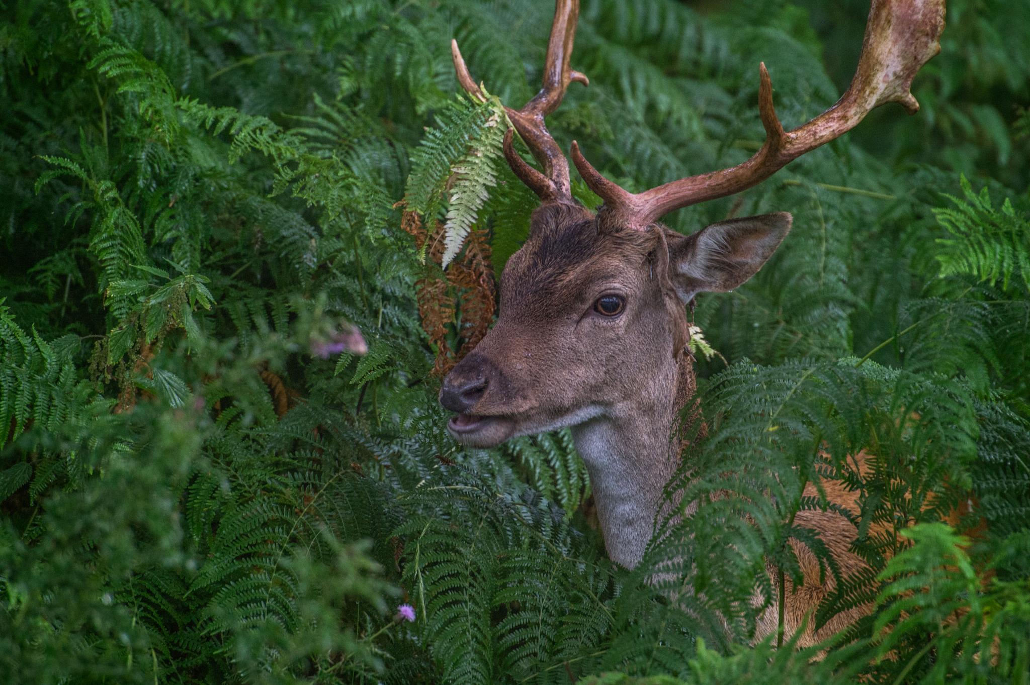 Oh Deer! by timhdr