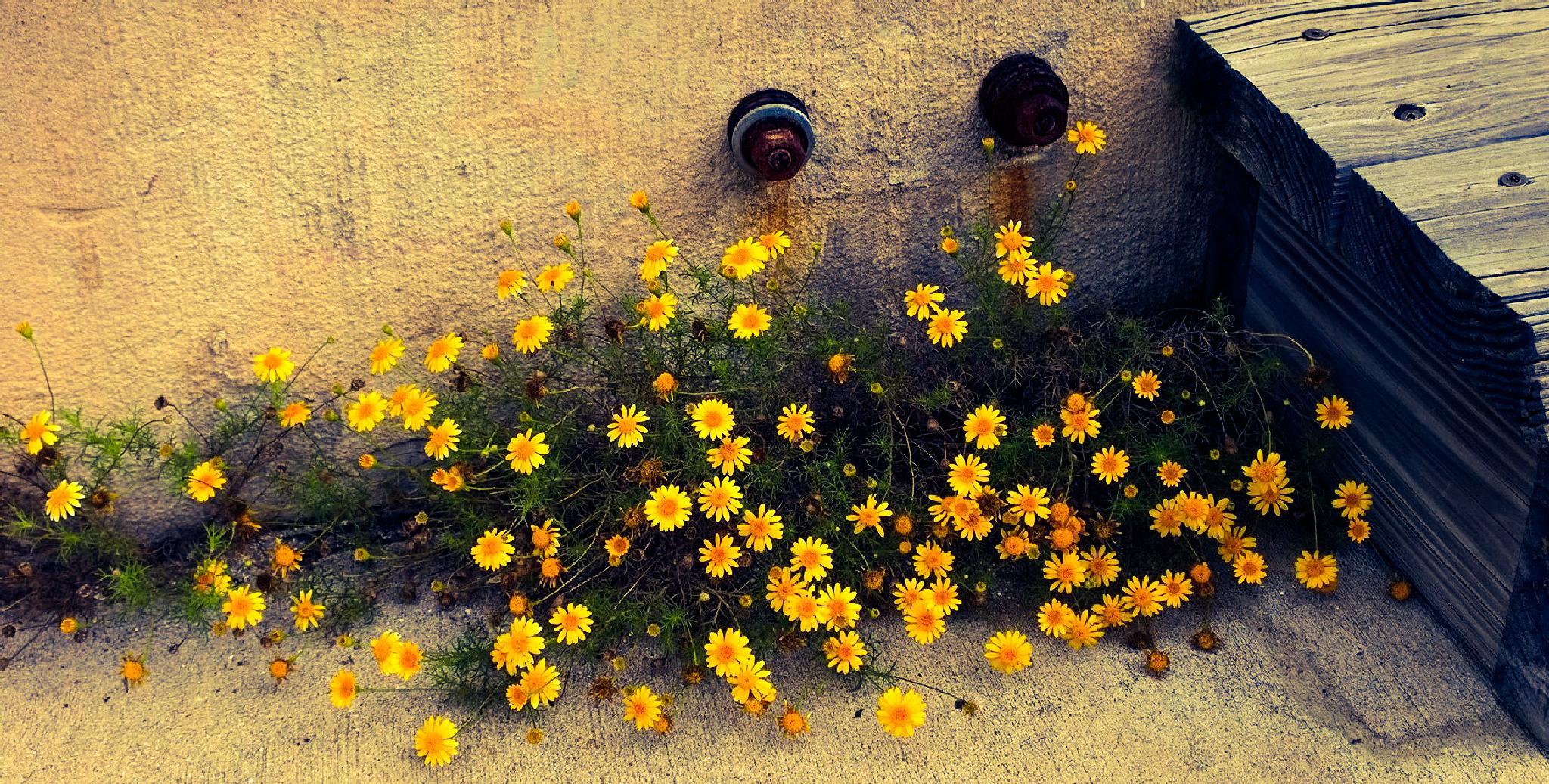 spring to life by lorin.glenn