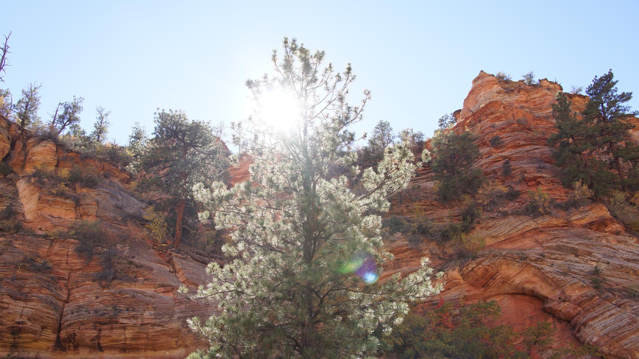 Sun through lonely tree by Sophia von Wrangell