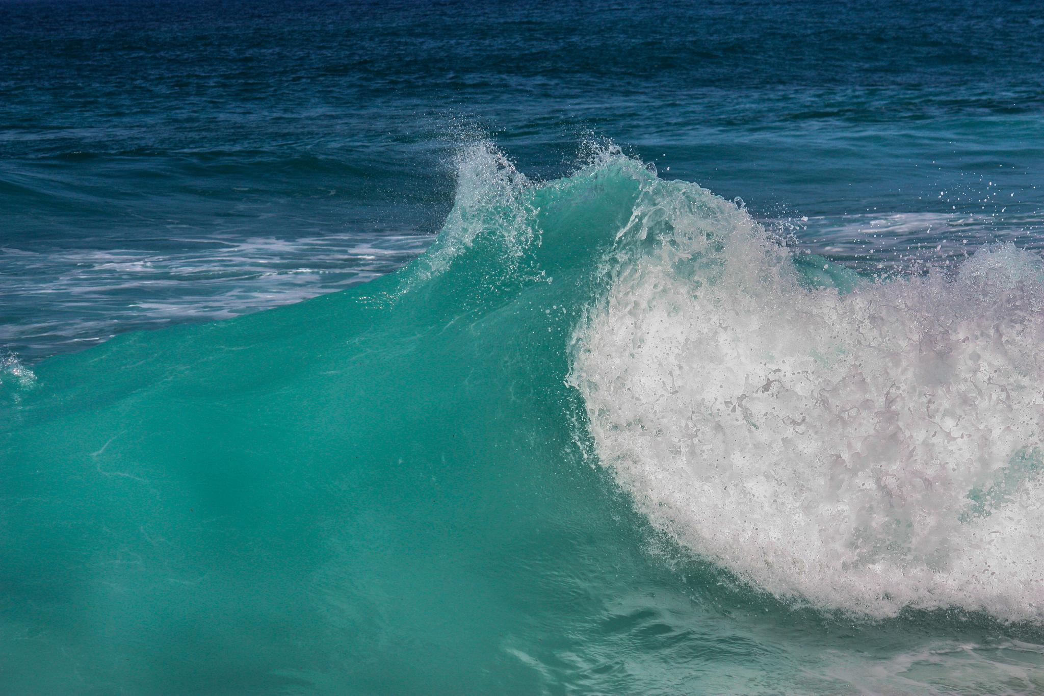 Hawaiian Wave by Sophia von Wrangell