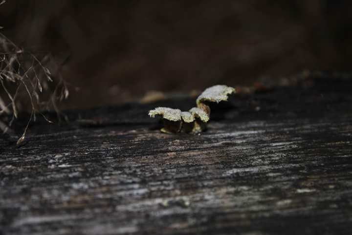paddenstoelen in de herfst  by ajkroon