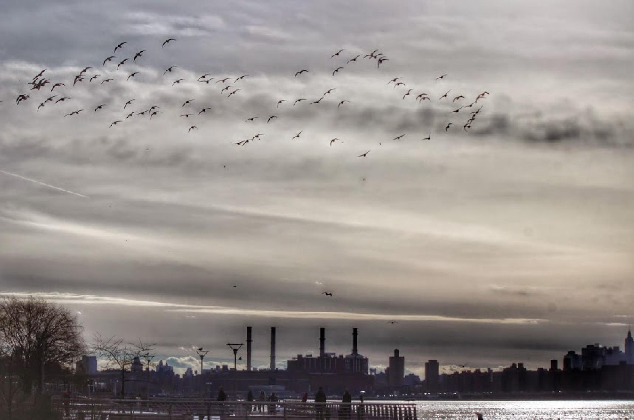 Birds by Benedito Luiz Arruda