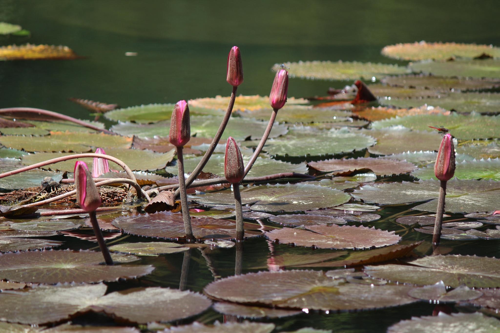 River Flowers by Benedito Luiz Arruda