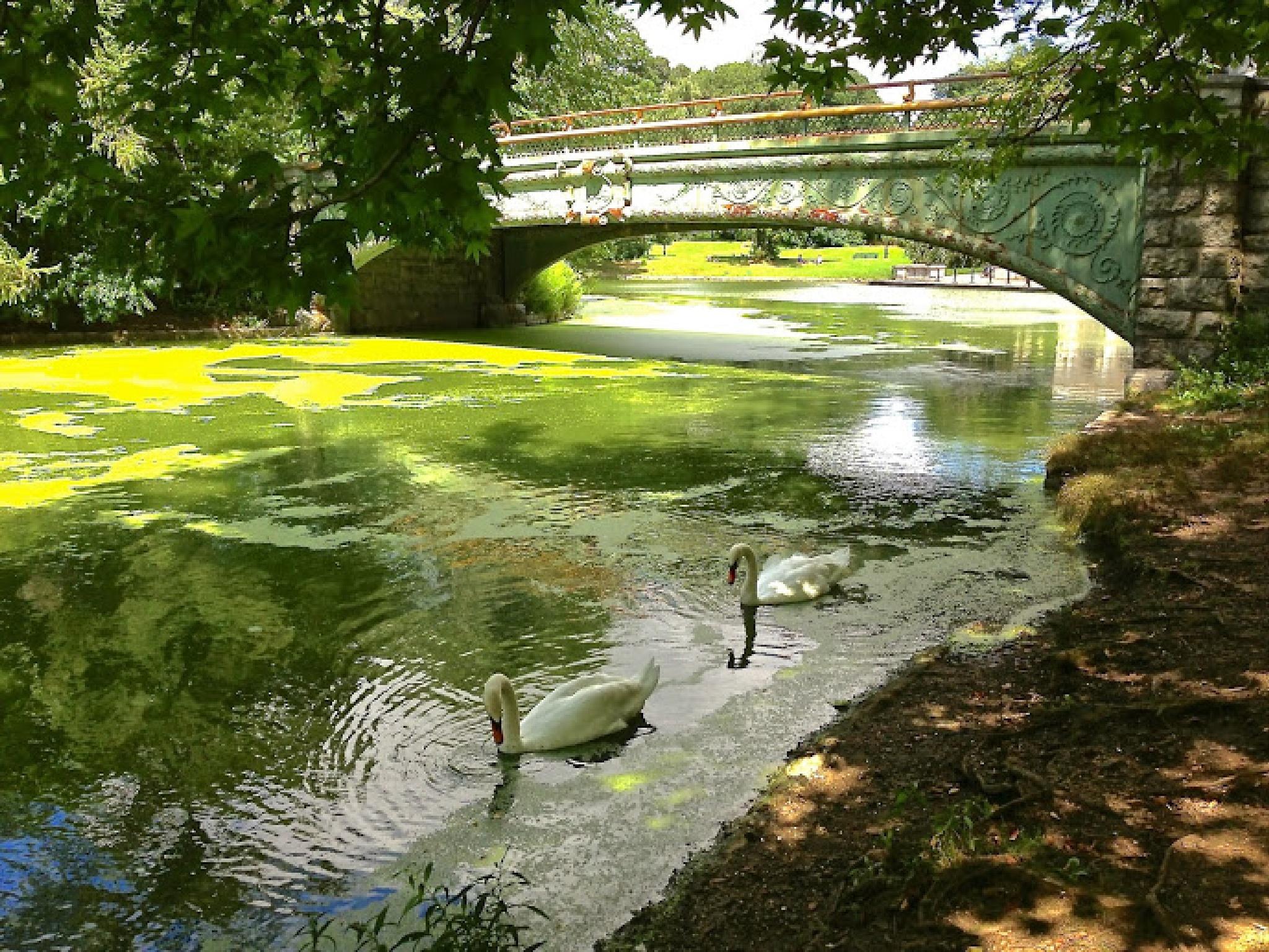 Green Waters by Benedito Luiz Arruda