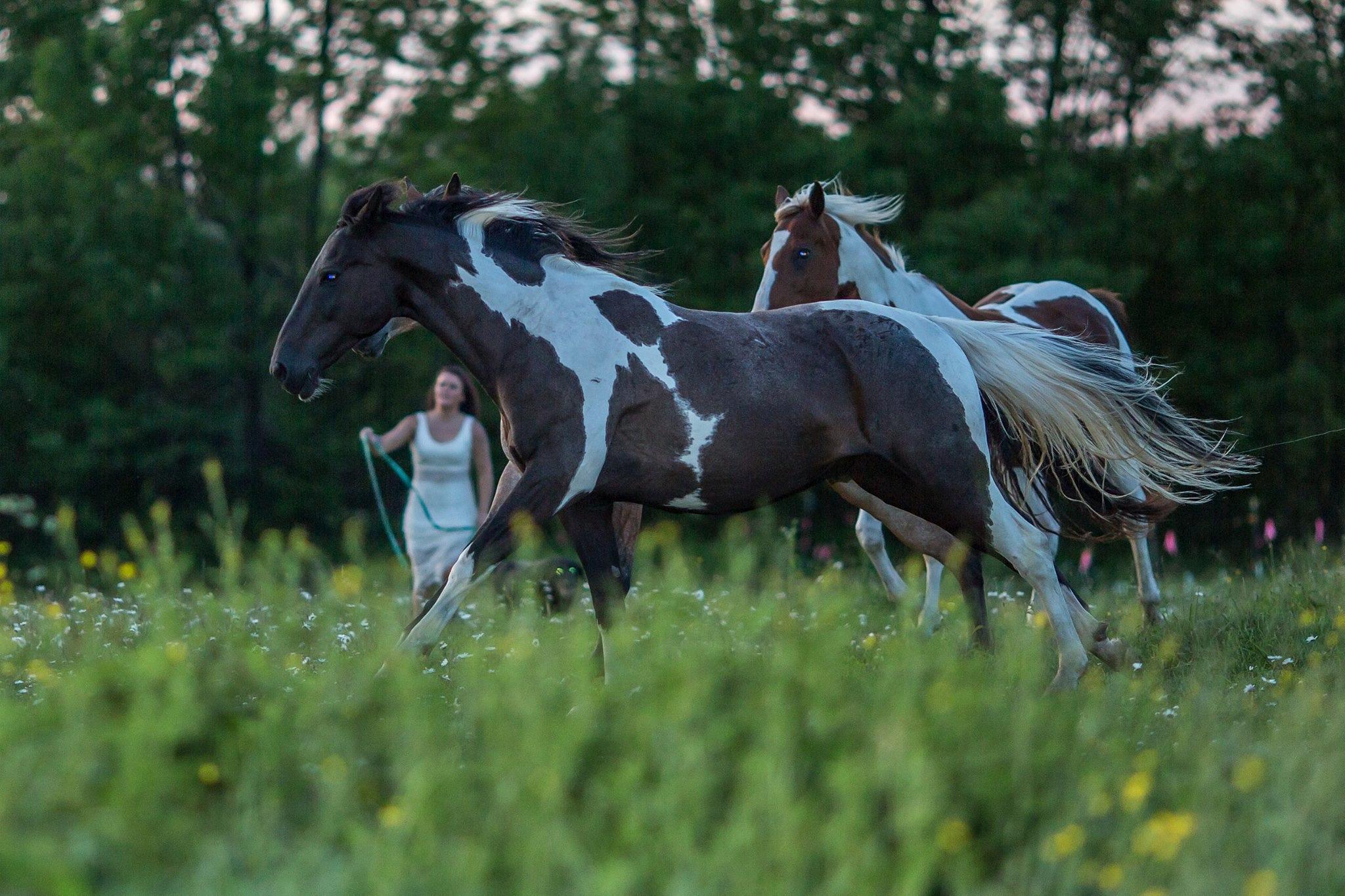 horses by teschs.sheet