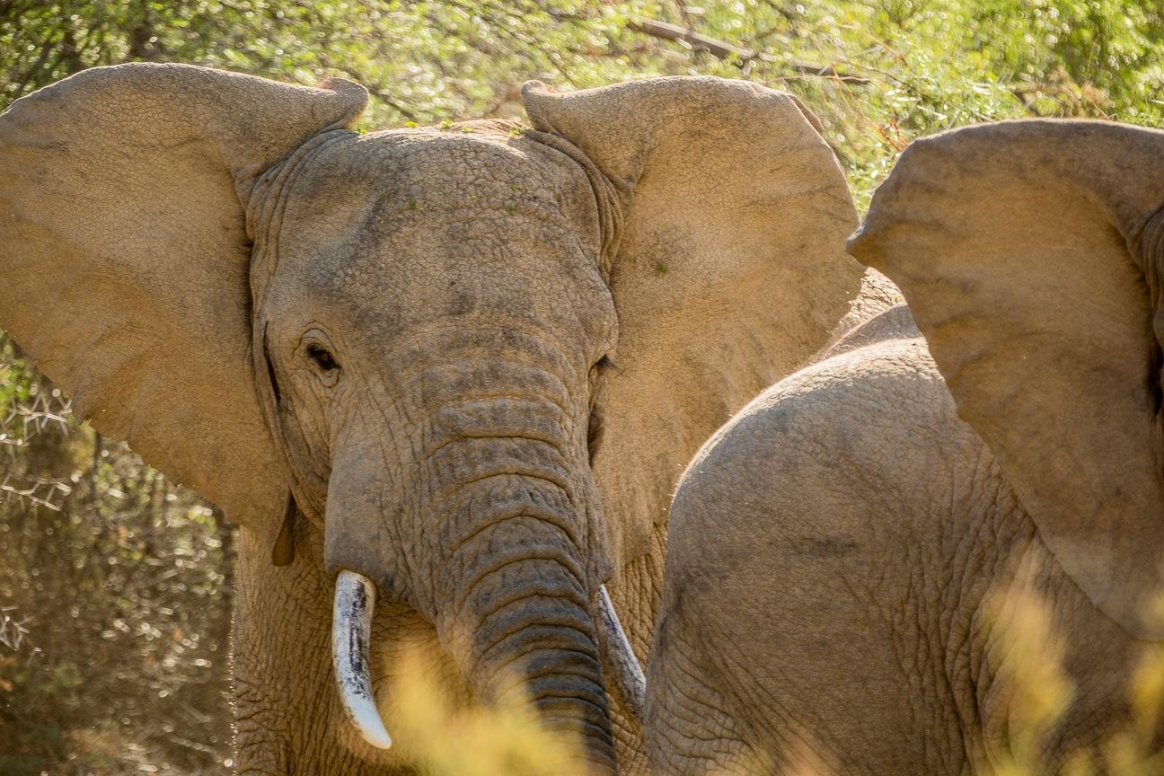 Angry Elephants by sdixon2380
