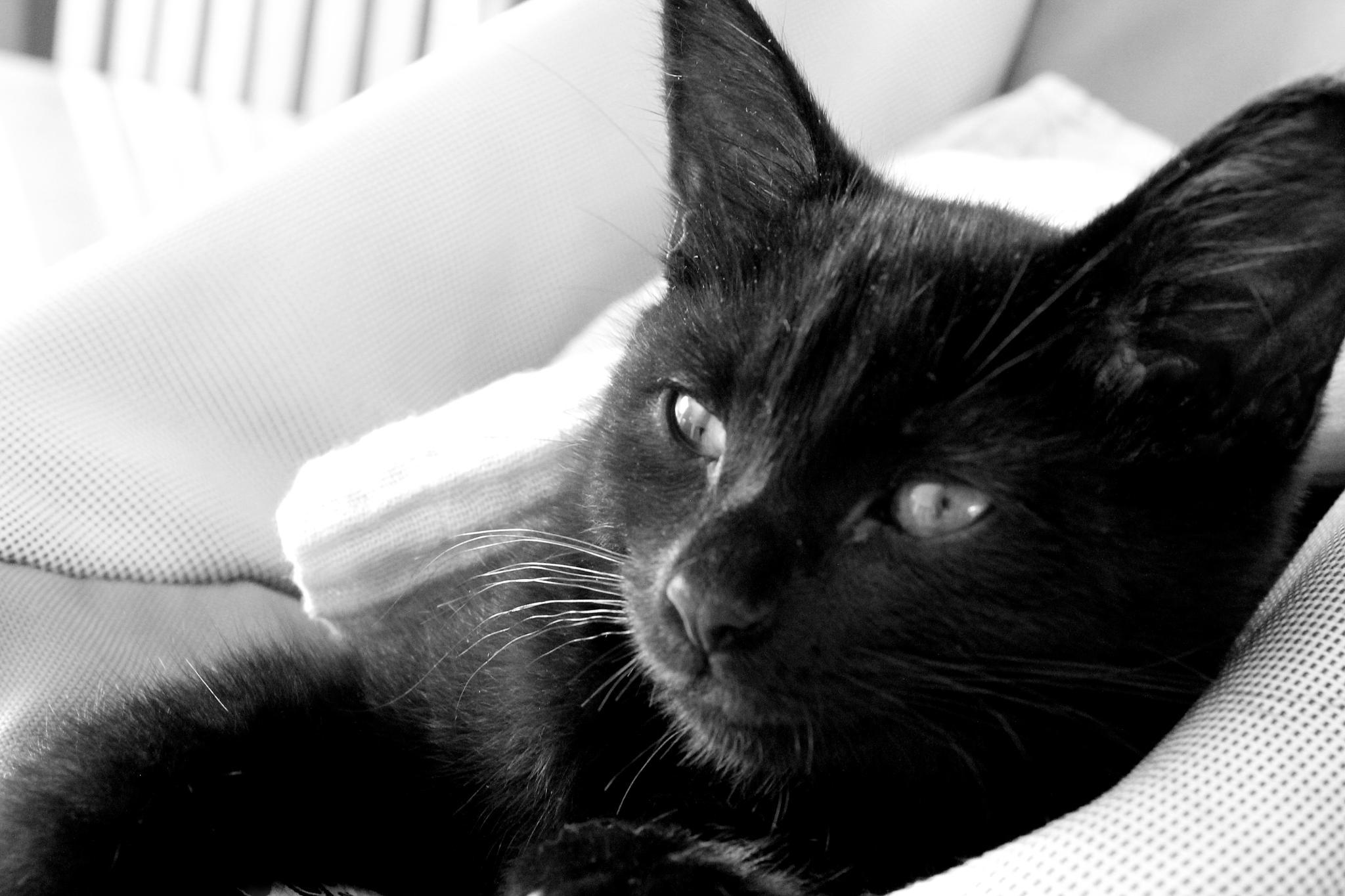 Poppy Kitten by Jayne K Fern~Bellissimo