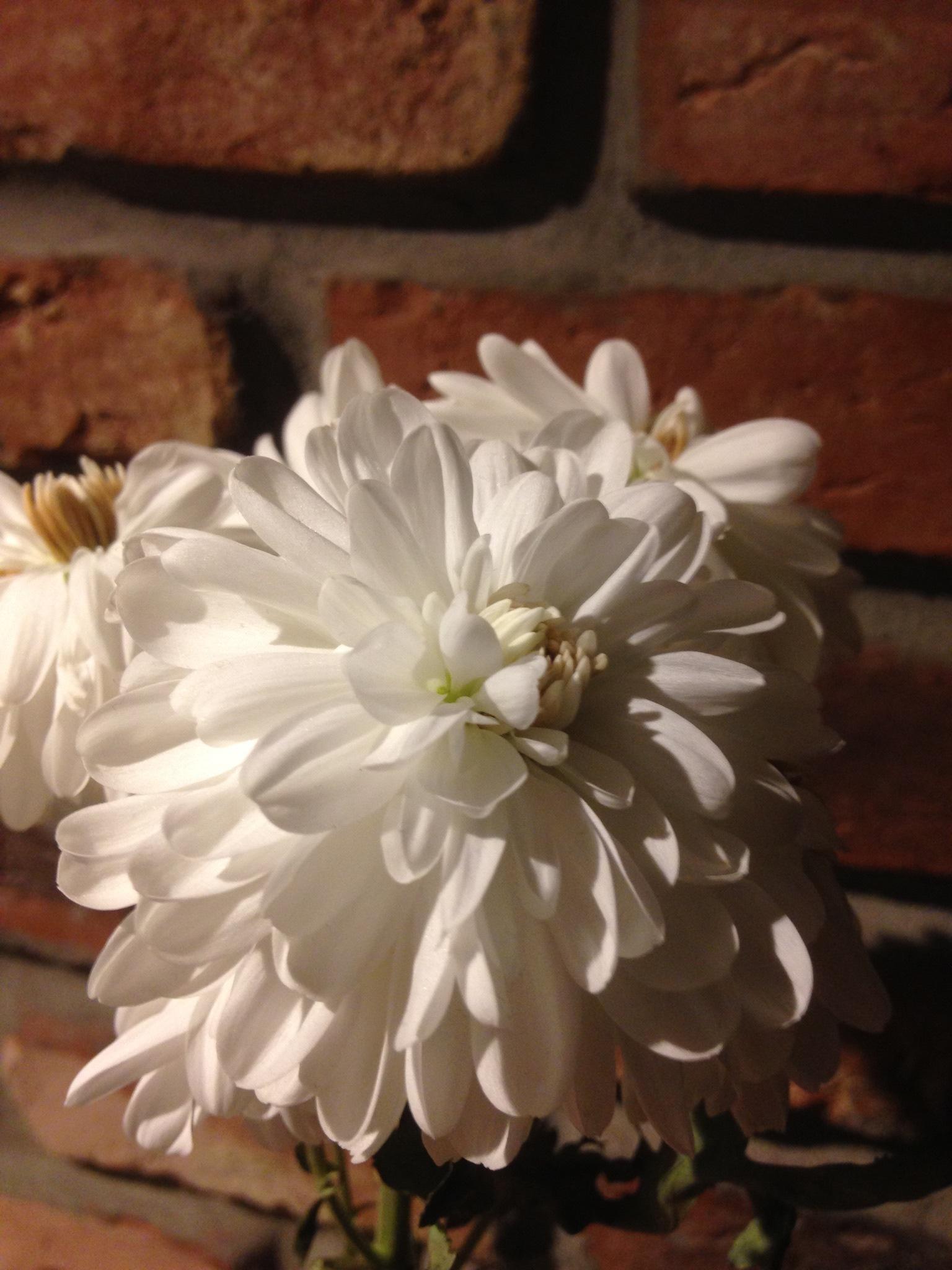 White flowers by MuminMama