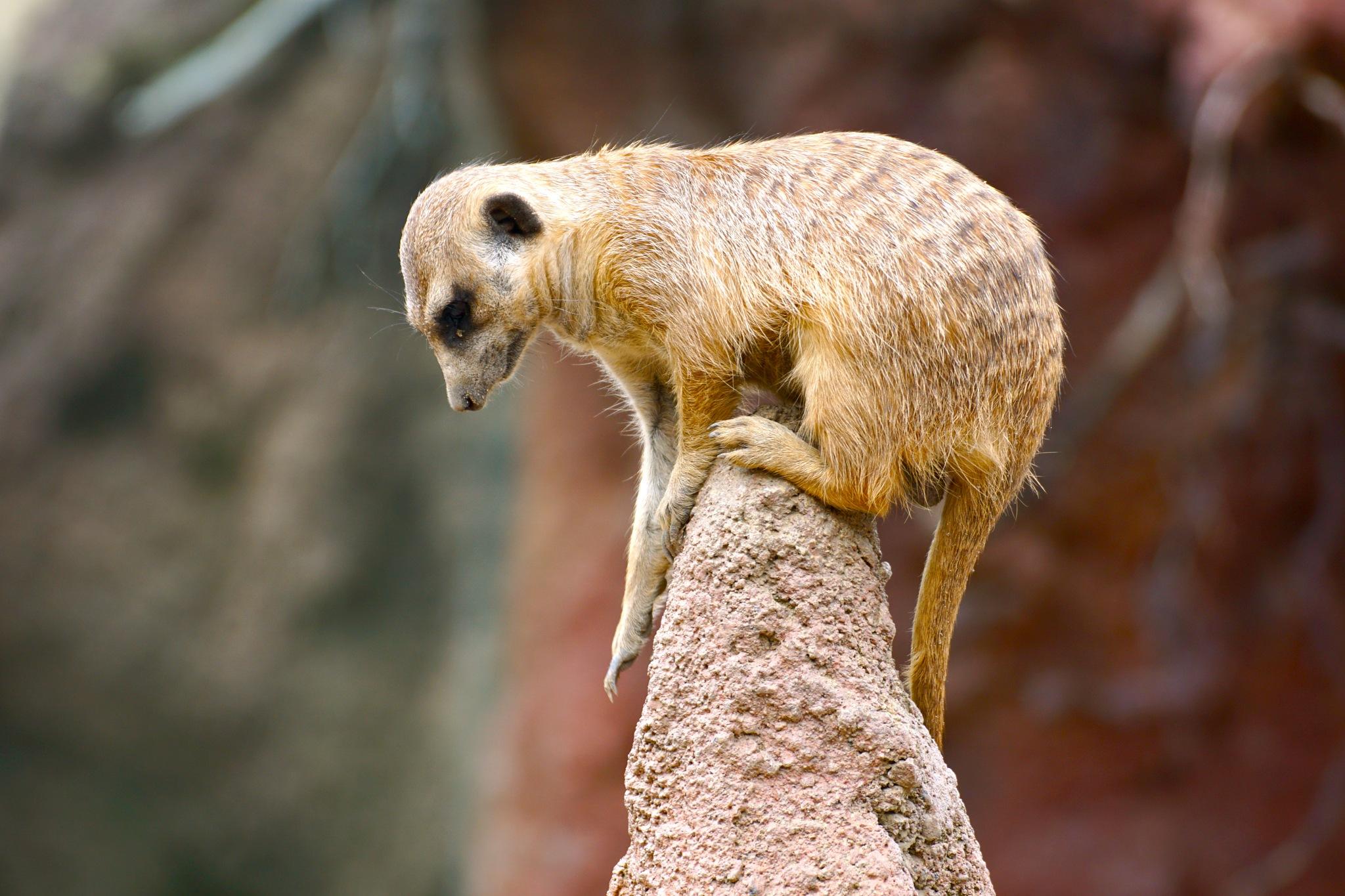 precarious perch by Debi Staron