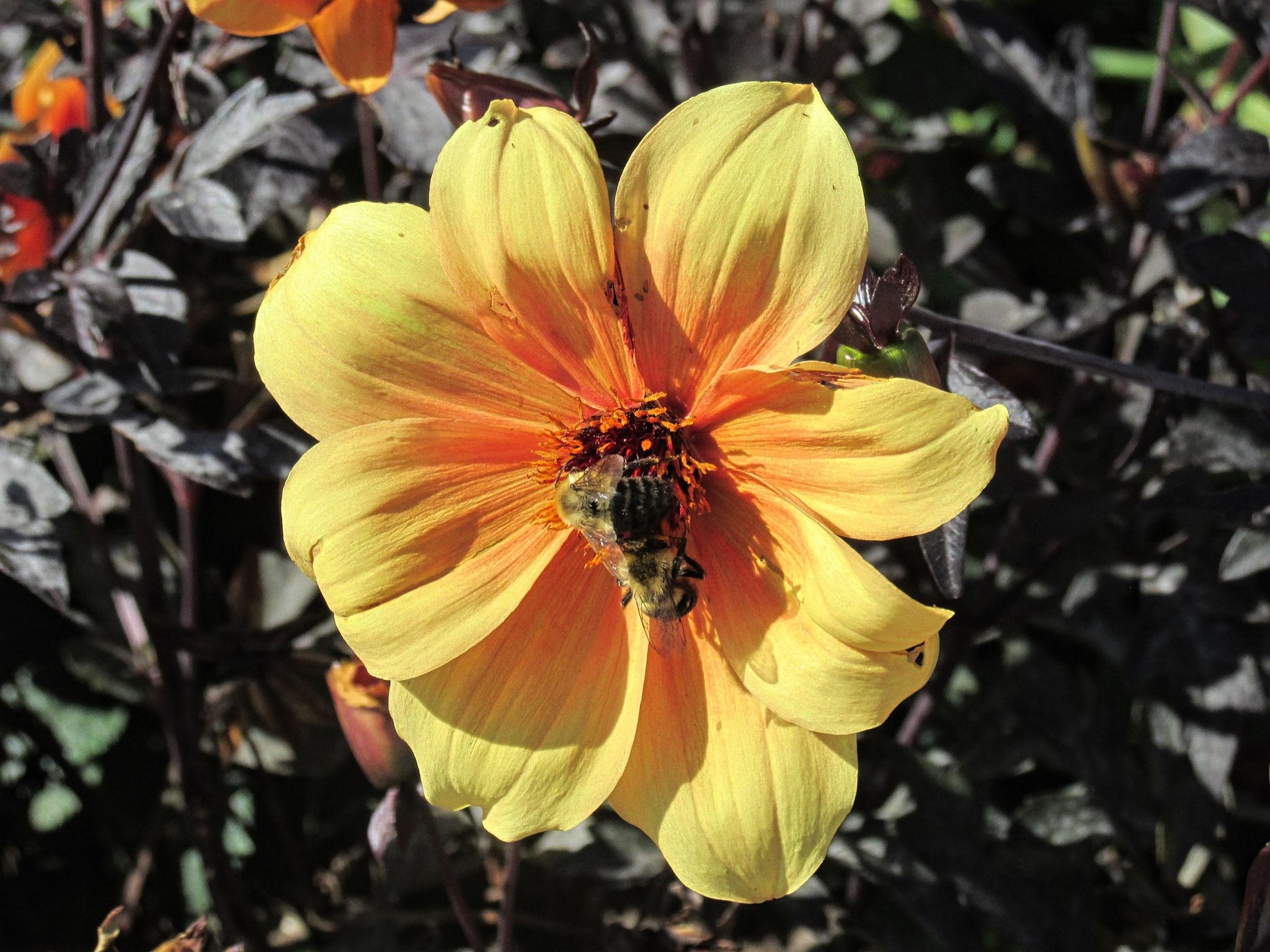 Autumn Pollination by gayle.wolfemartinez