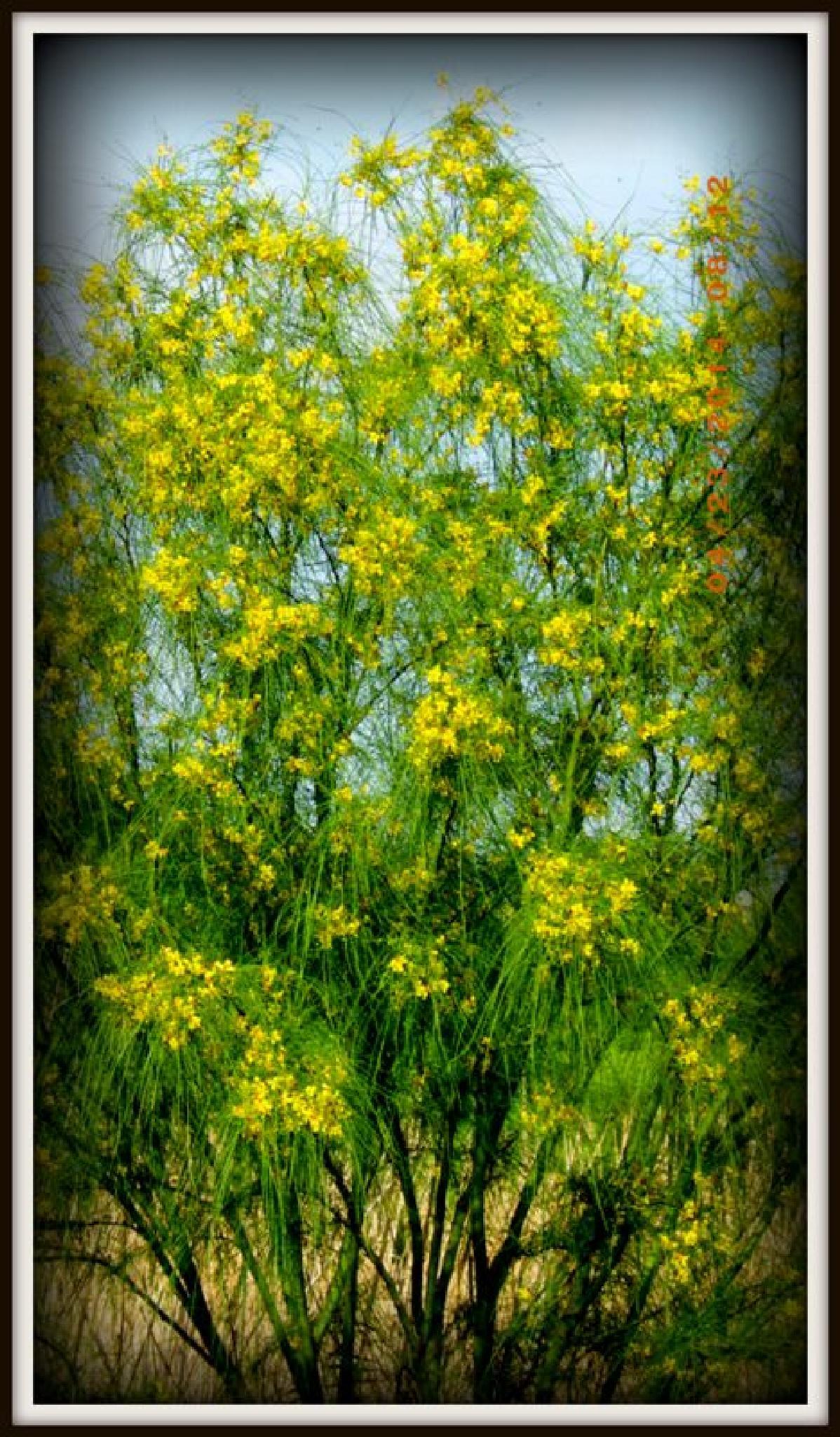 April showers bring spring Flowers by BVierke