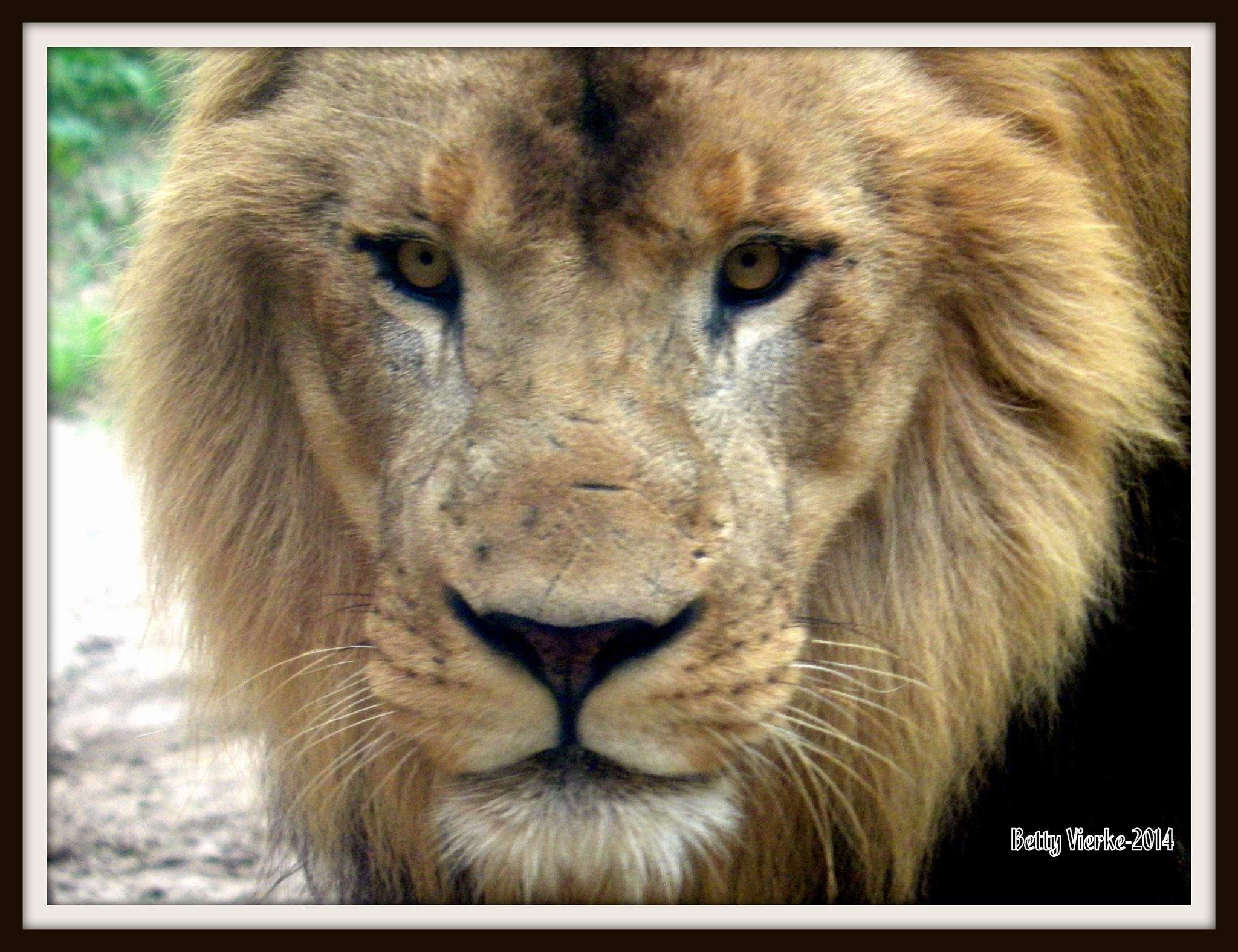 King of the Jungle by BVierke
