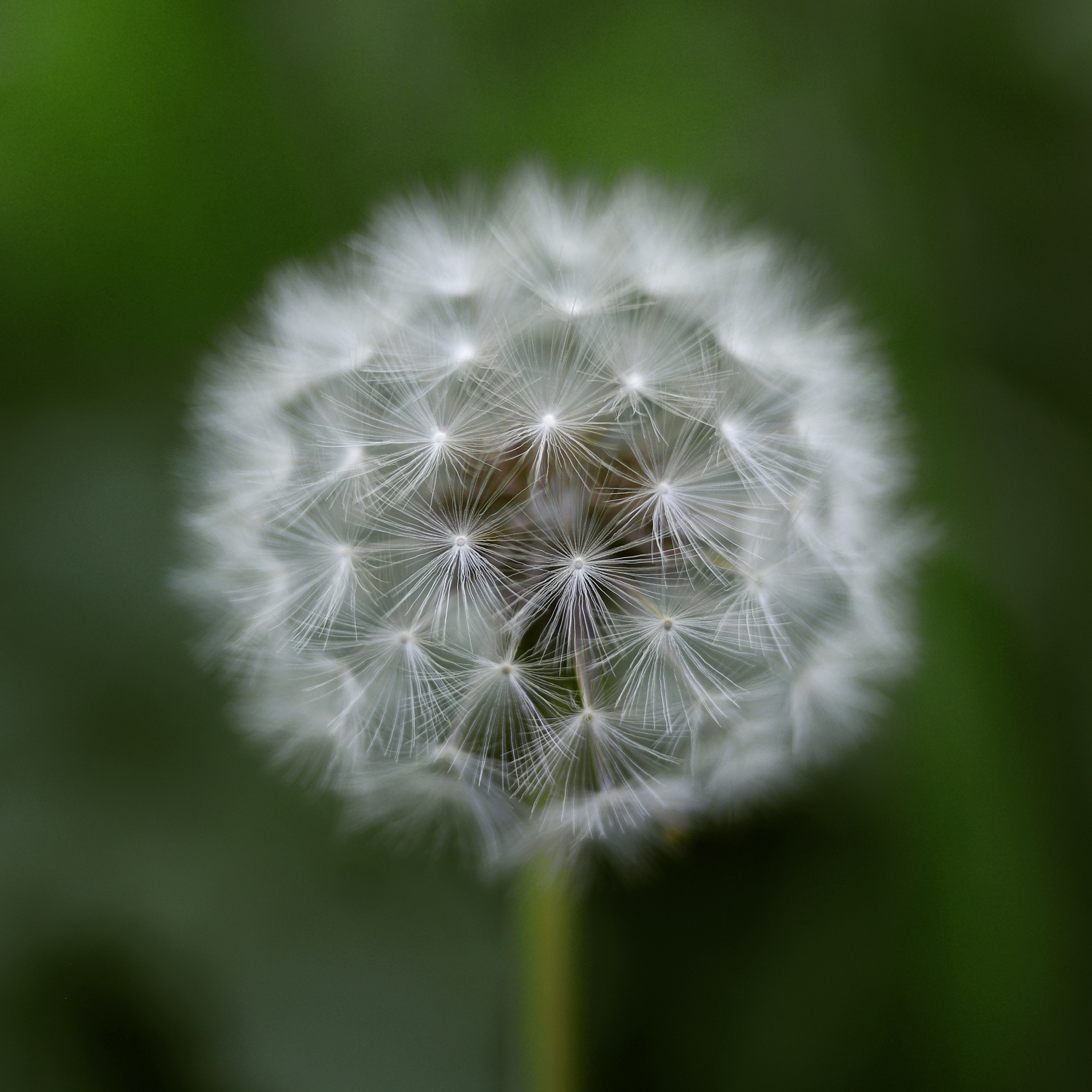 Every One a Wish by Goleudy