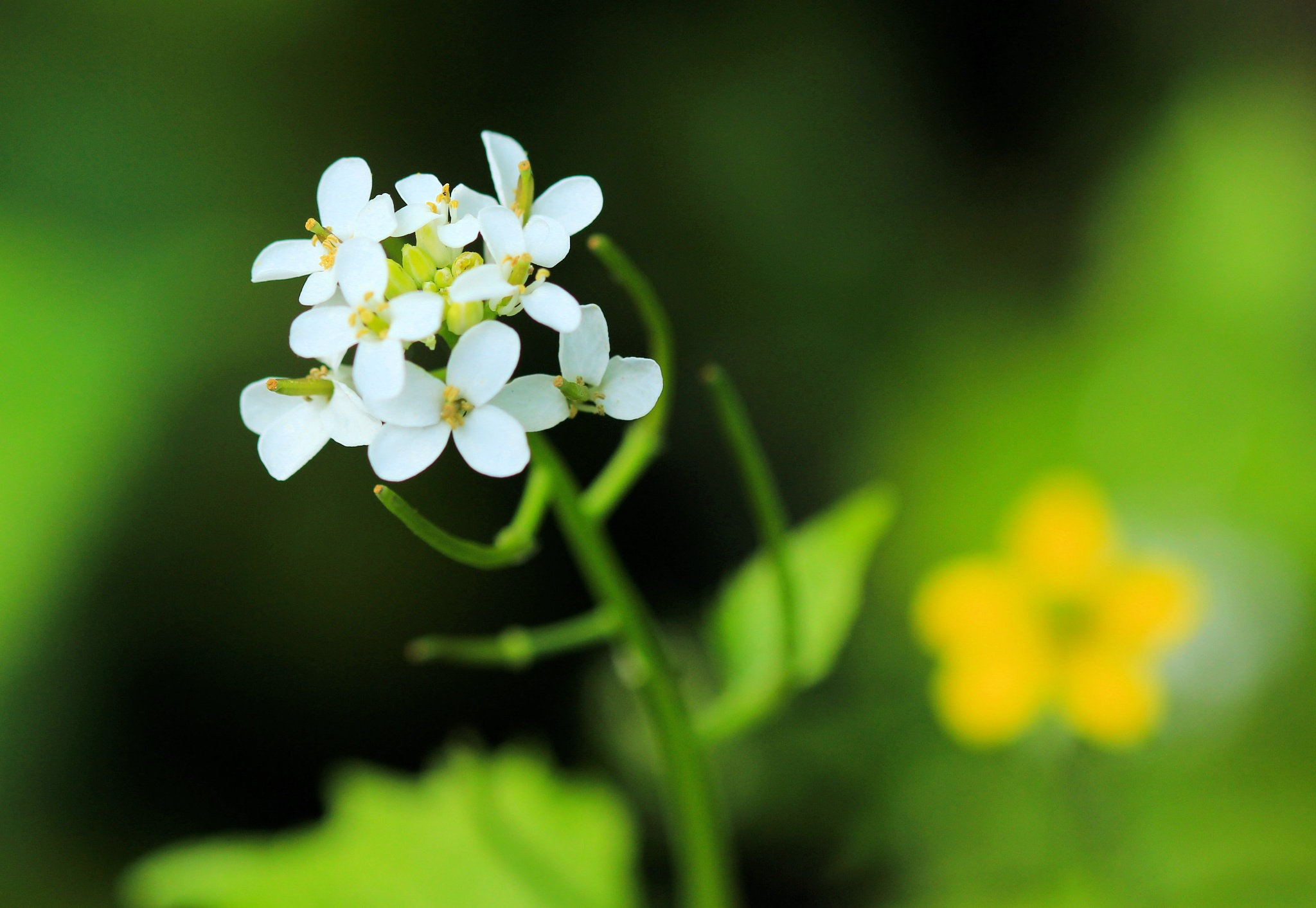 White Petals by cln.wvr