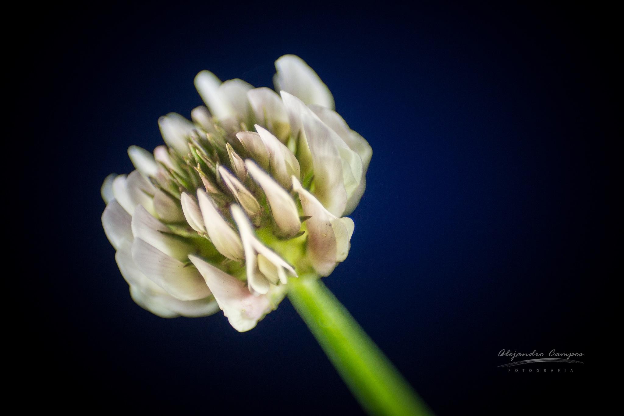 Those details. by alejandrocamposfotografia