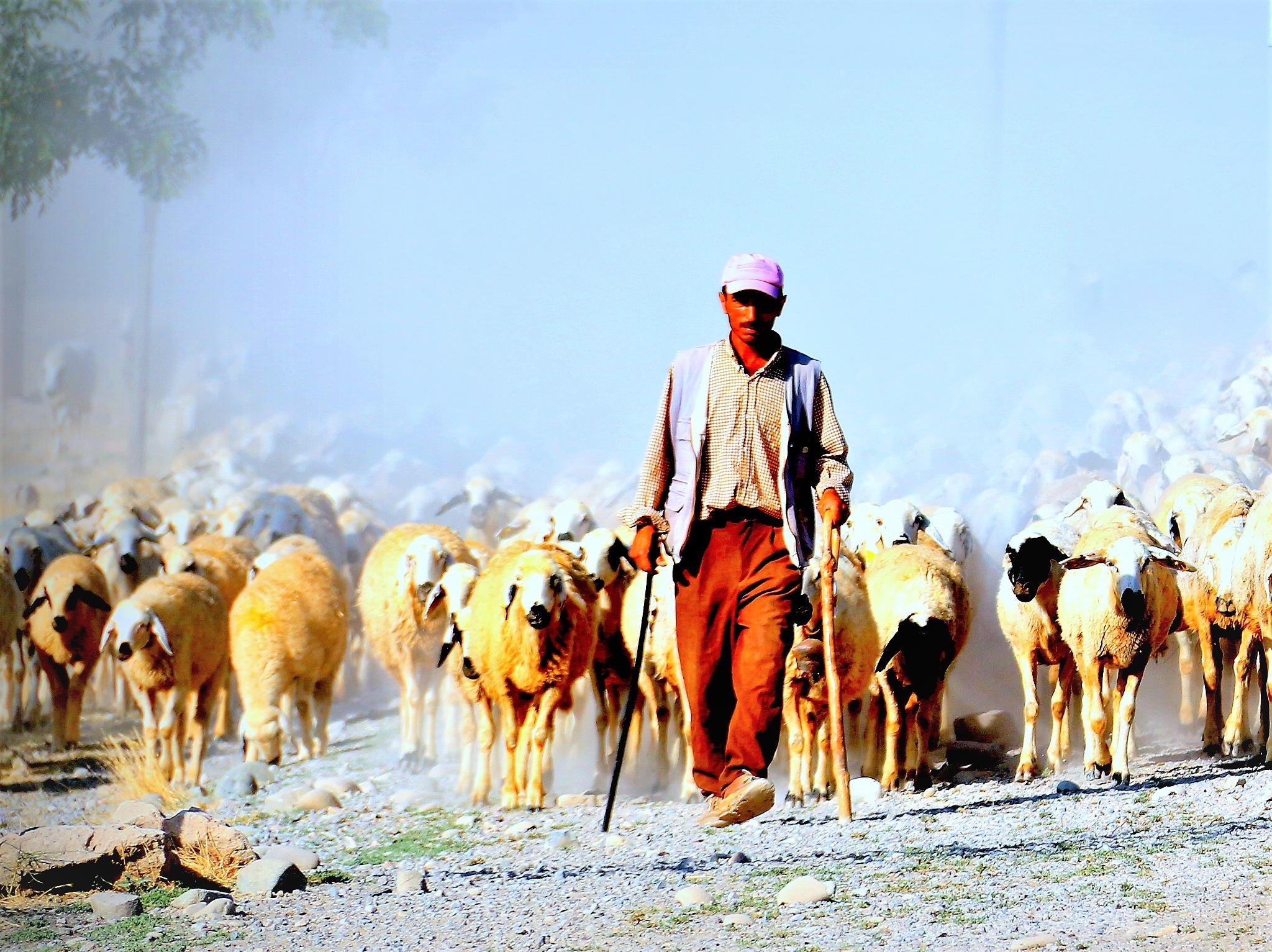 5984...Shepherd... by Bedirhan Küpeli