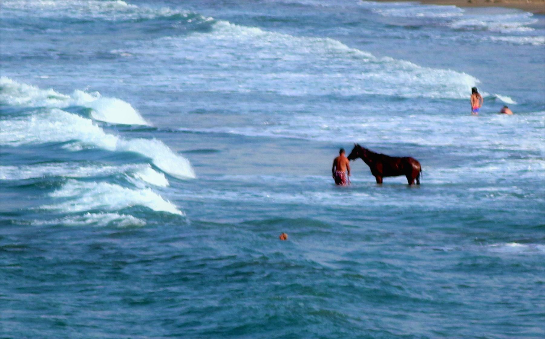 7007... Horse and sea... by Bedirhan Küpeli