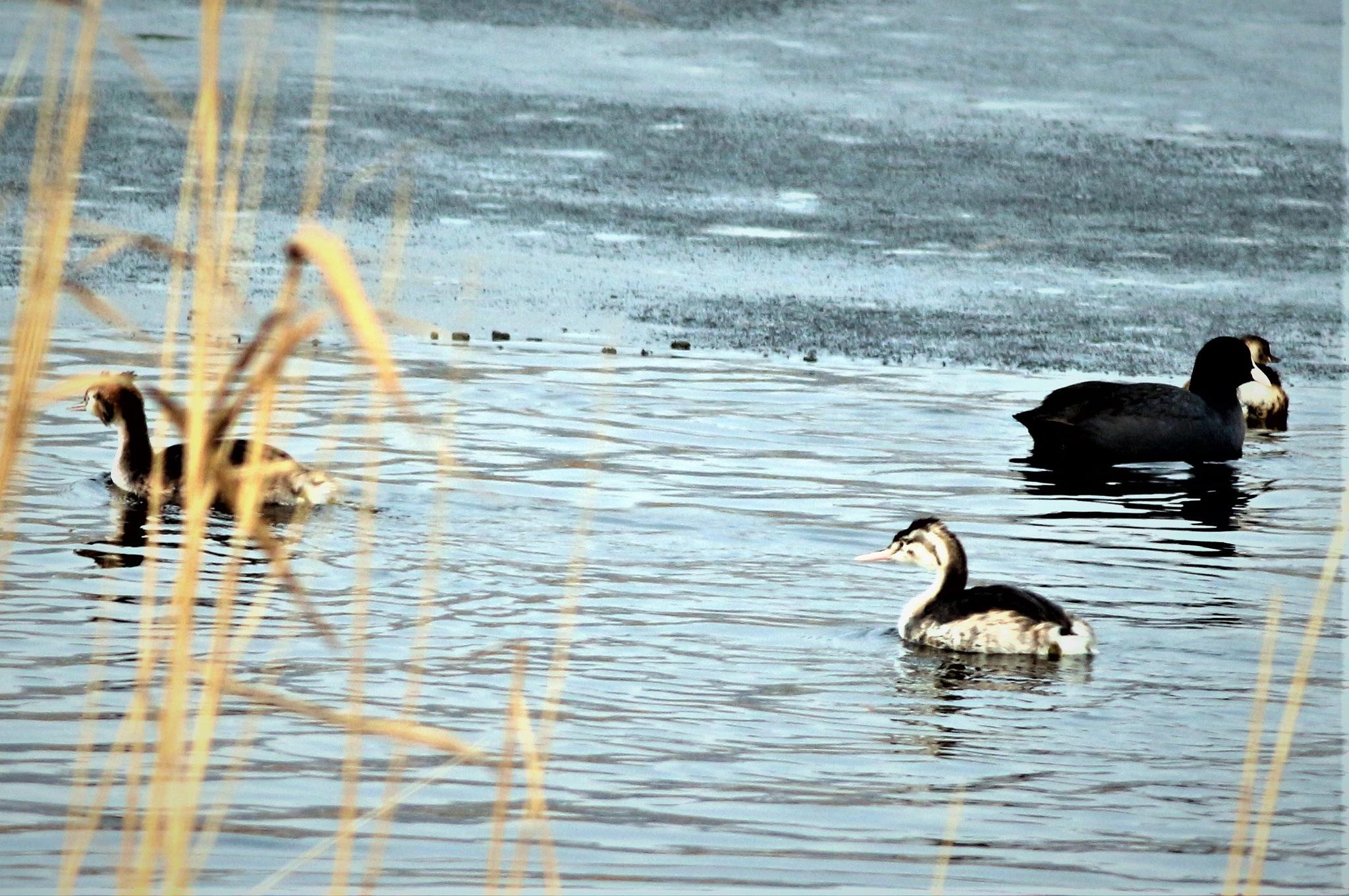 6892... On the lake... by Bedirhan Küpeli