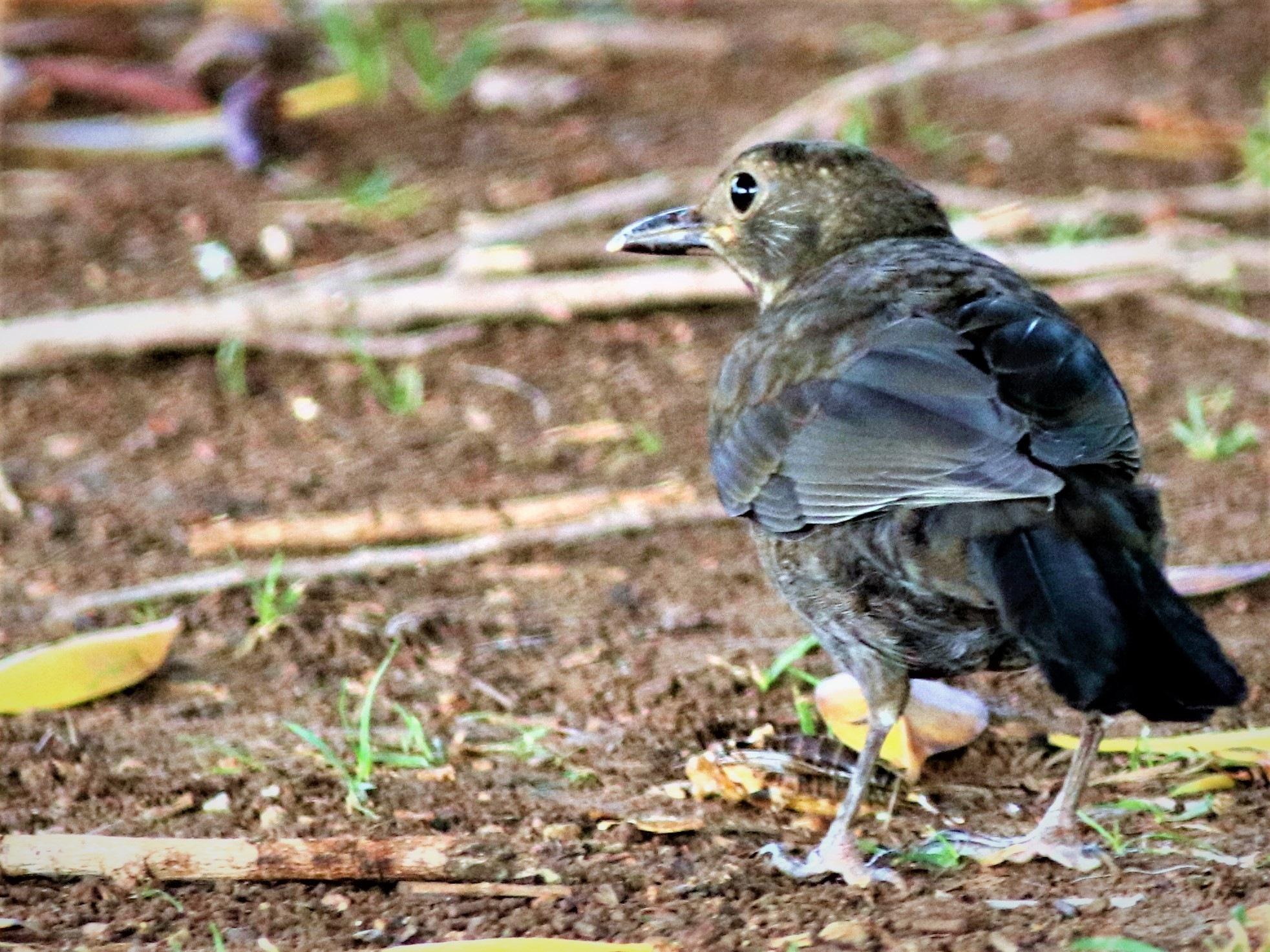 6989... Blackbird... by Bedirhan Küpeli