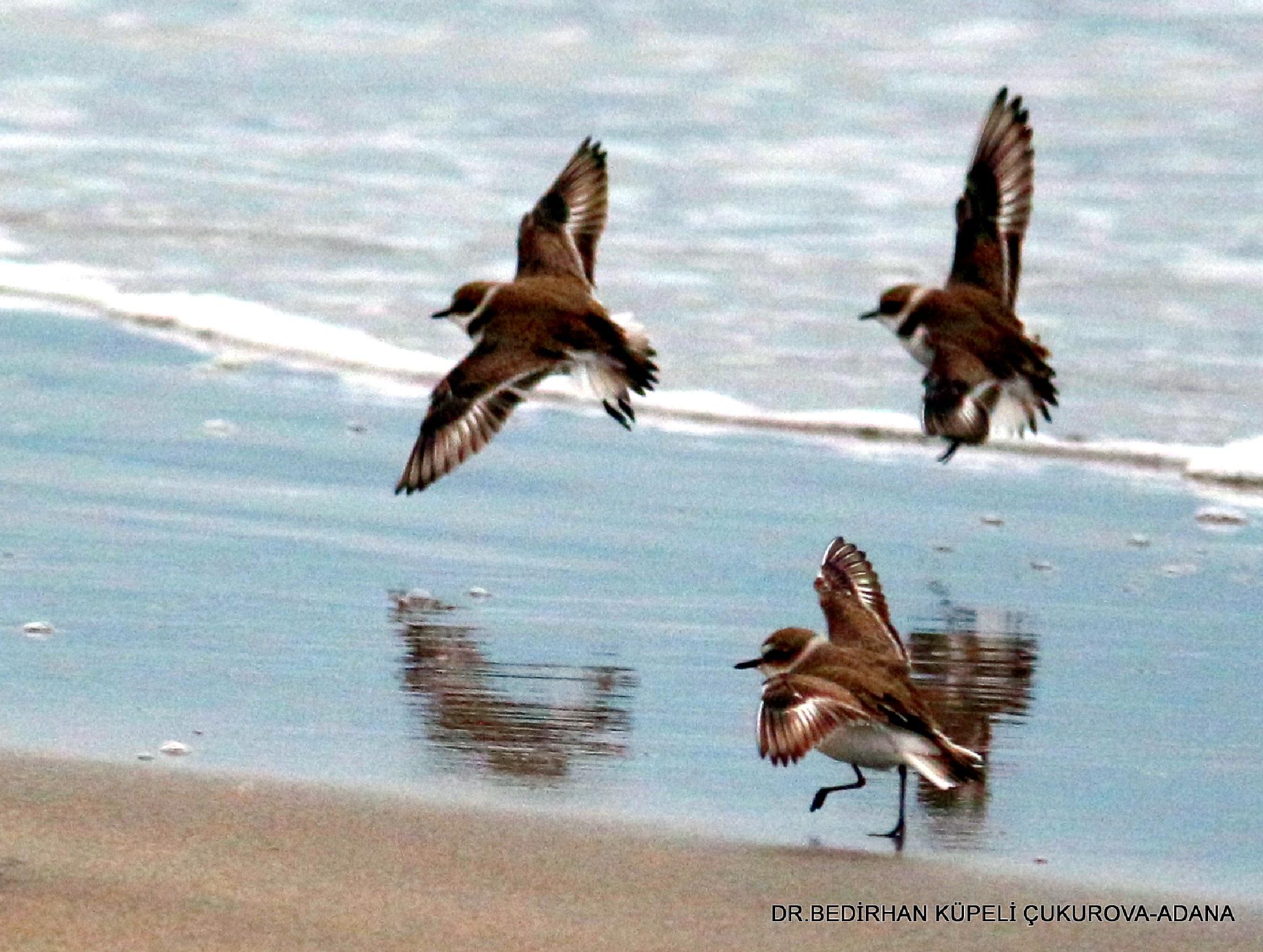 let's fly together .... by Bedirhan Küpeli