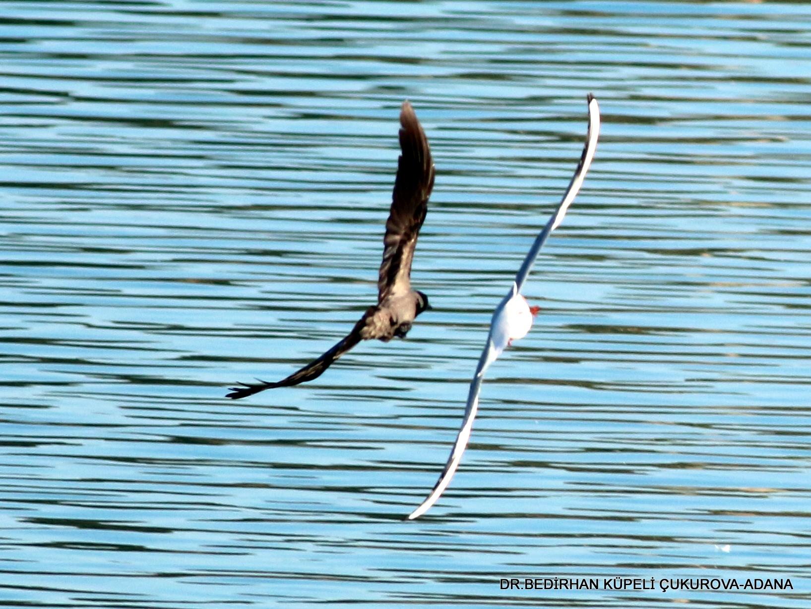 fight in the sky.... by Bedirhan Küpeli