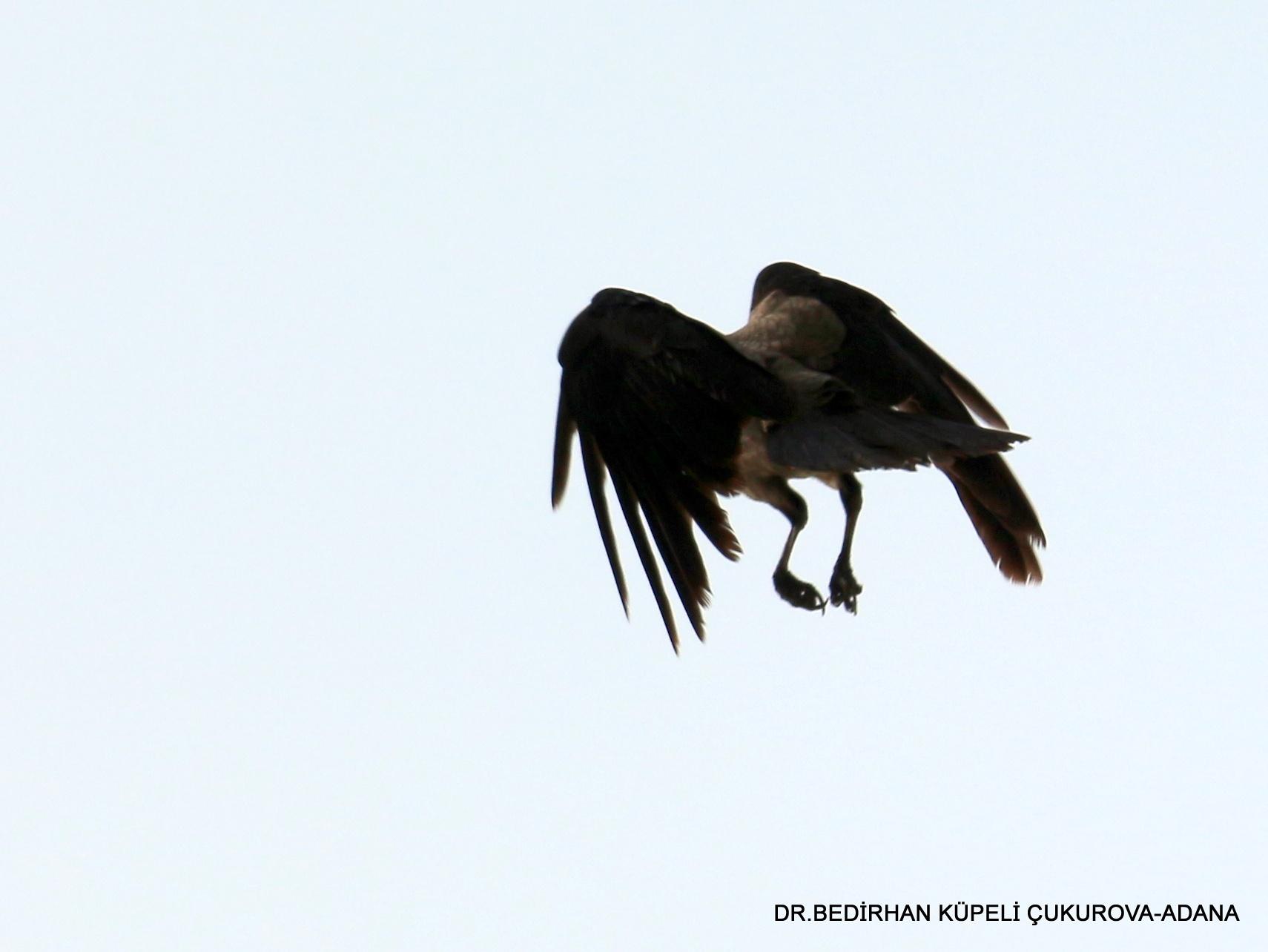 dancing in the air...or...preparing for landing.. by Bedirhan Küpeli