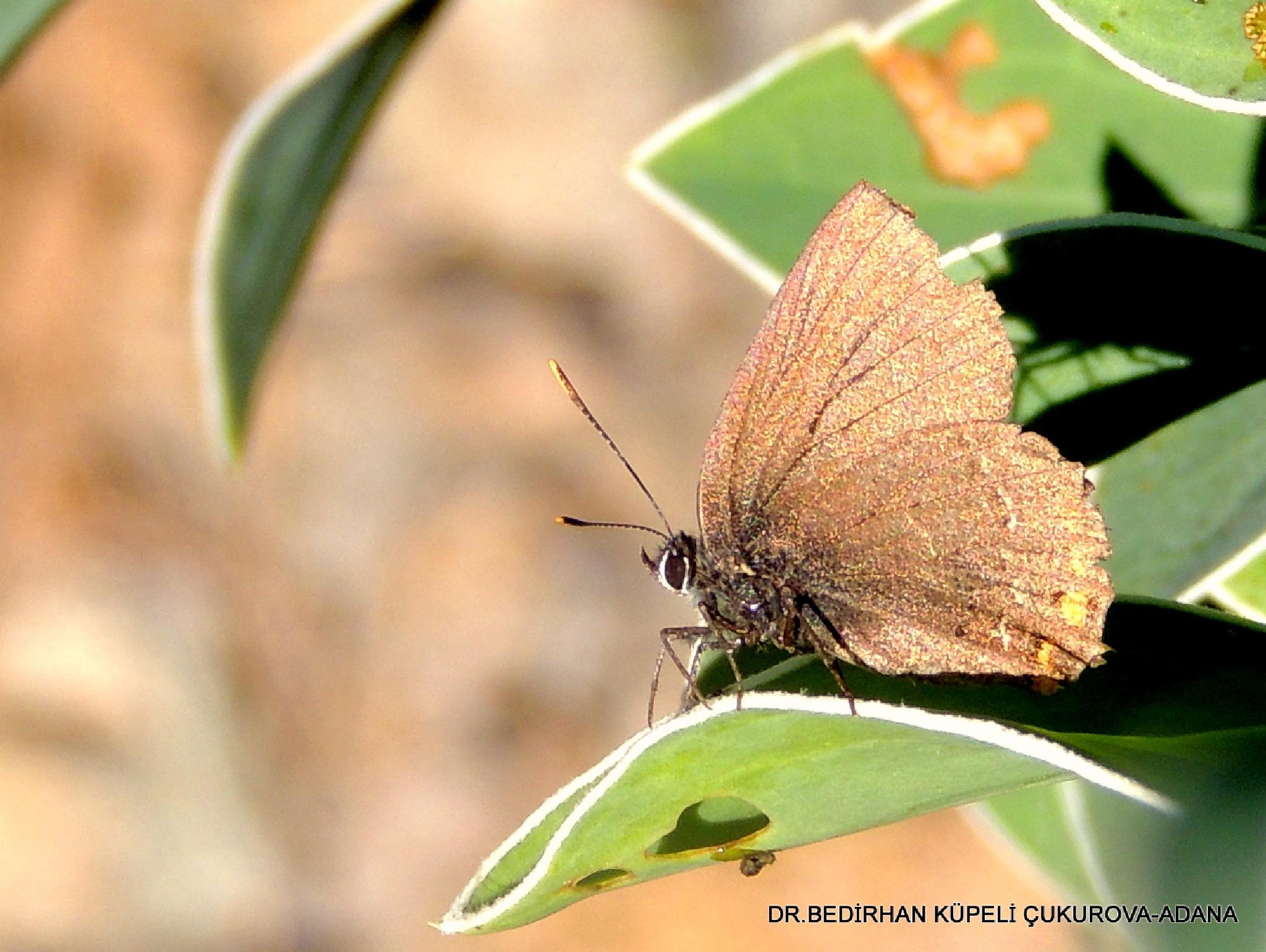 Butterfly-3 by Bedirhan Küpeli