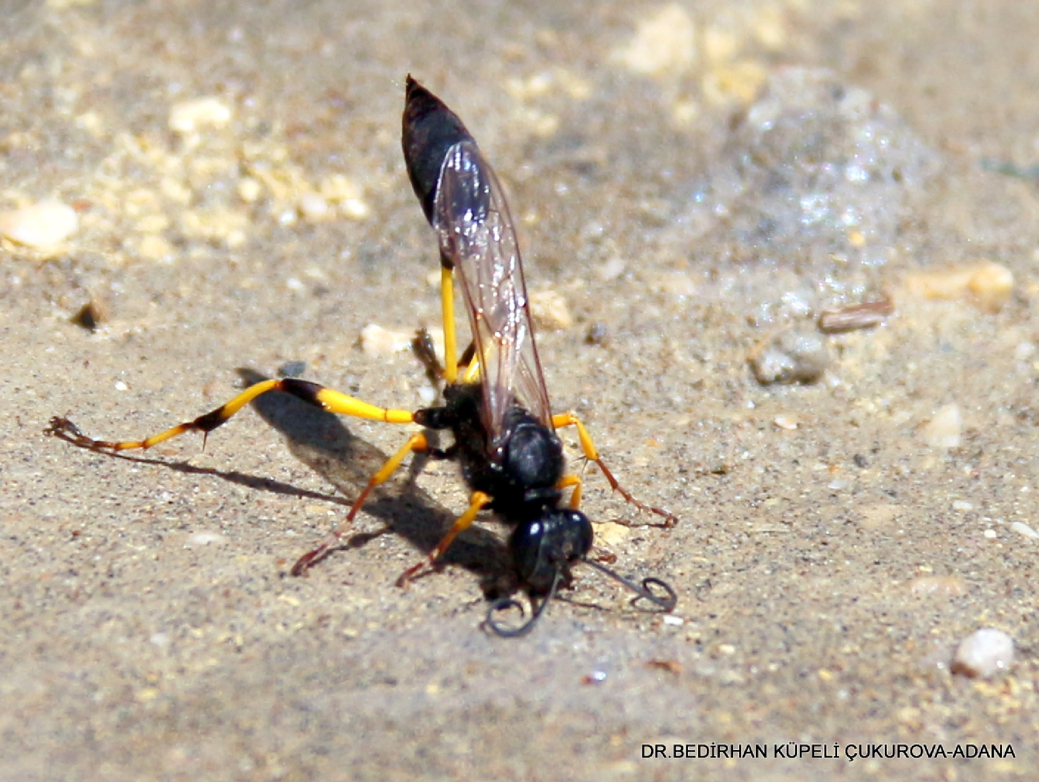 Wasp-6 by Bedirhan Küpeli