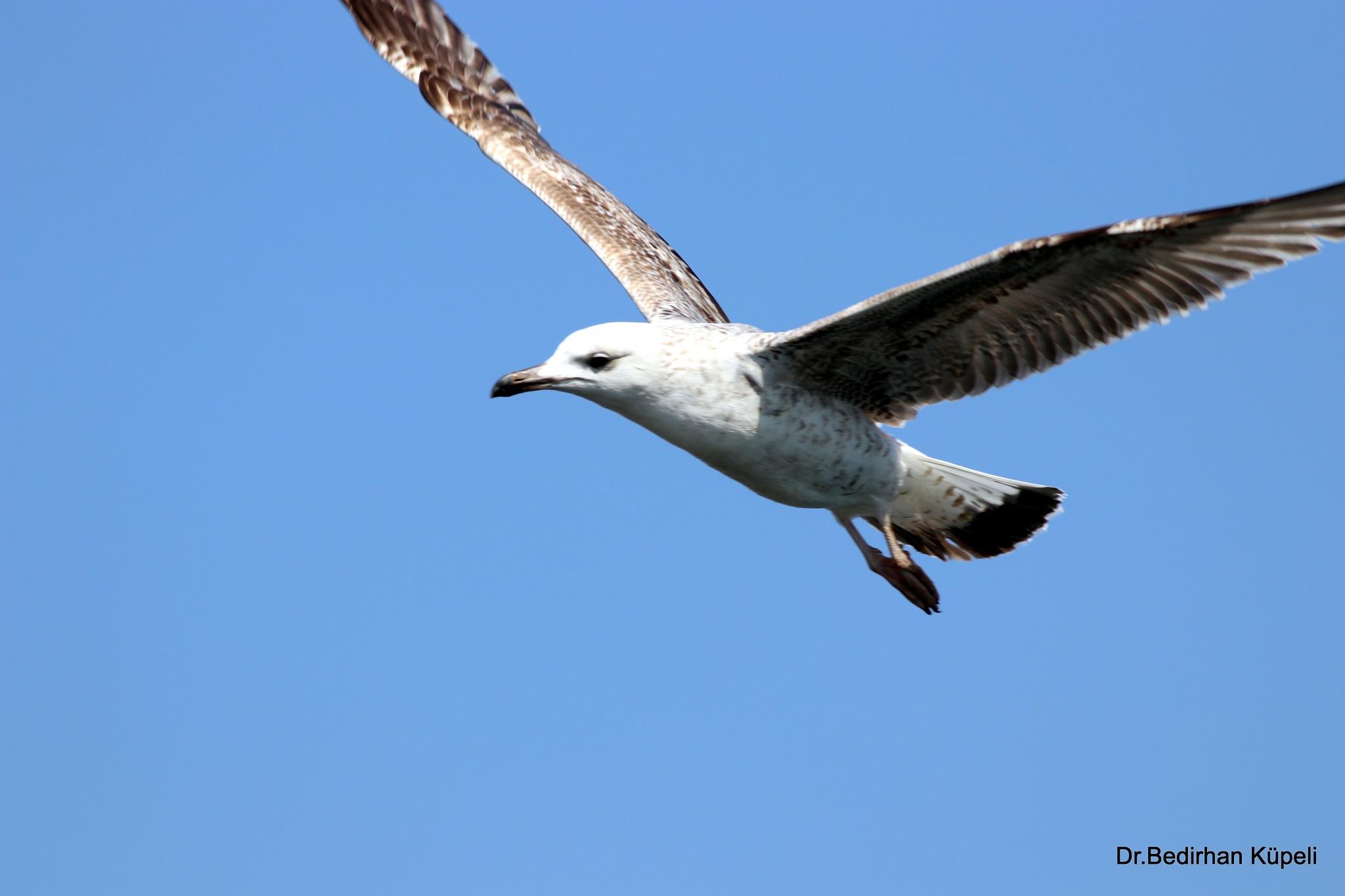 5299... Flight... by Bedirhan Küpeli