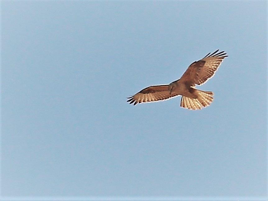 8832... Flight... by Bedirhan Küpeli