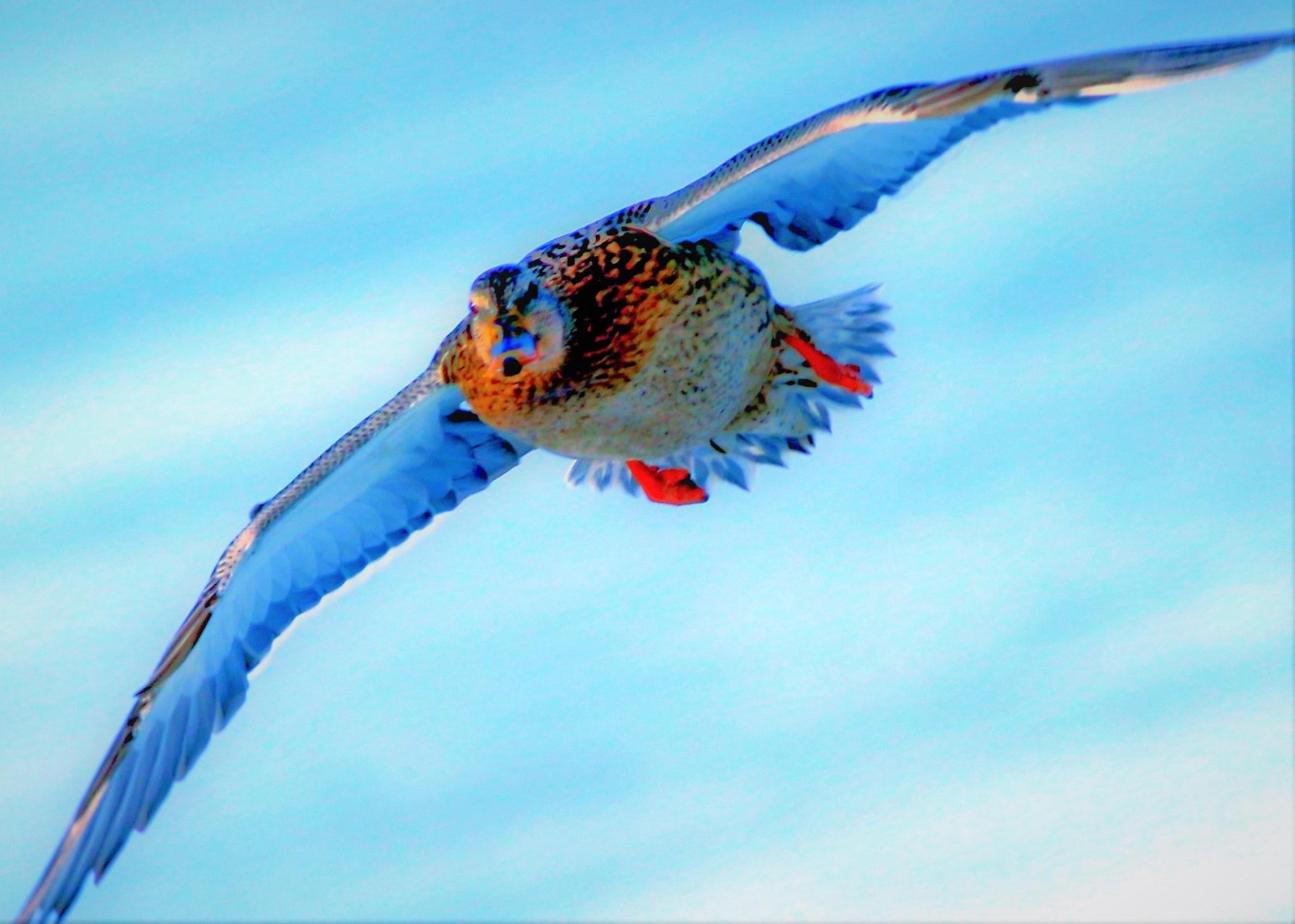5966... Flight... by Bedirhan Küpeli