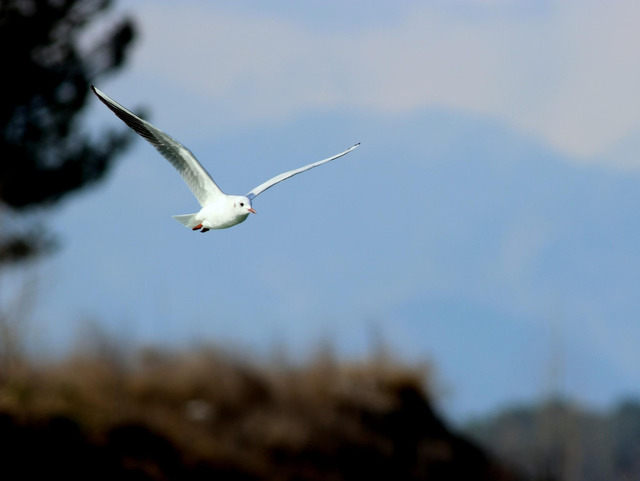 Flight... by Bedirhan Küpeli