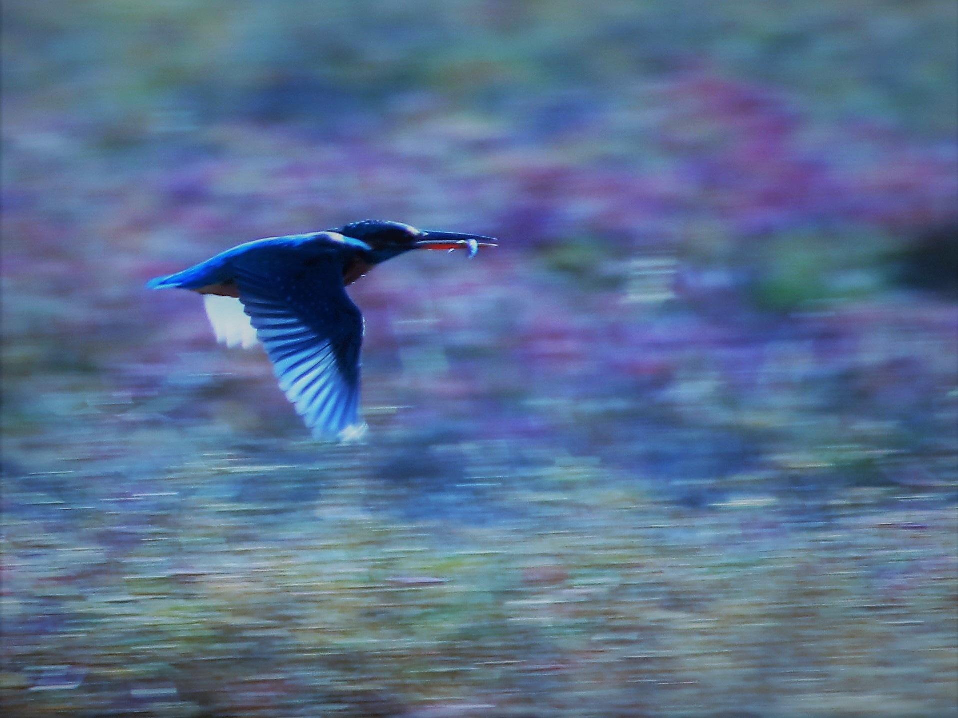 5938... Hunting fish... by Bedirhan Küpeli