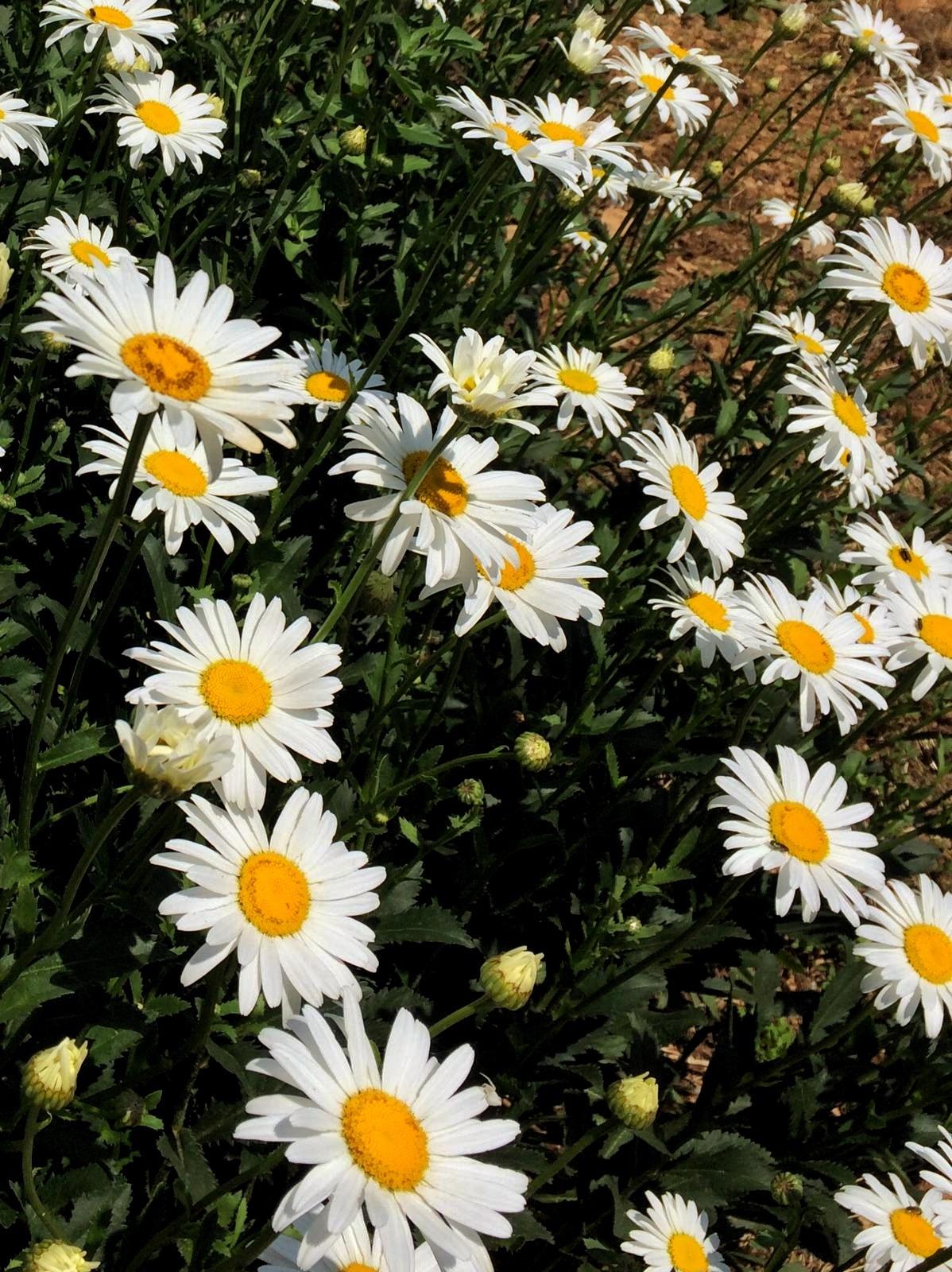 10950...Spring flowers... by Bedirhan Küpeli