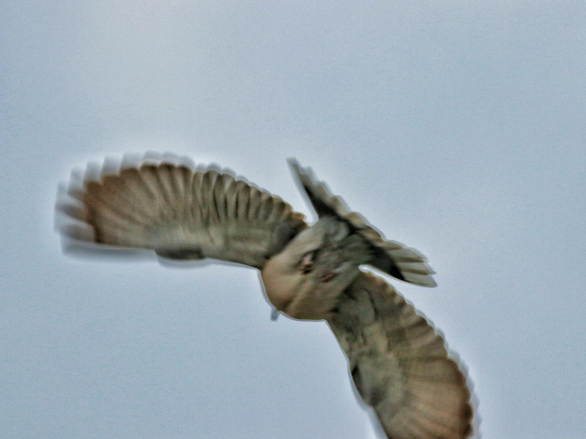4661... Flight... by Bedirhan Küpeli