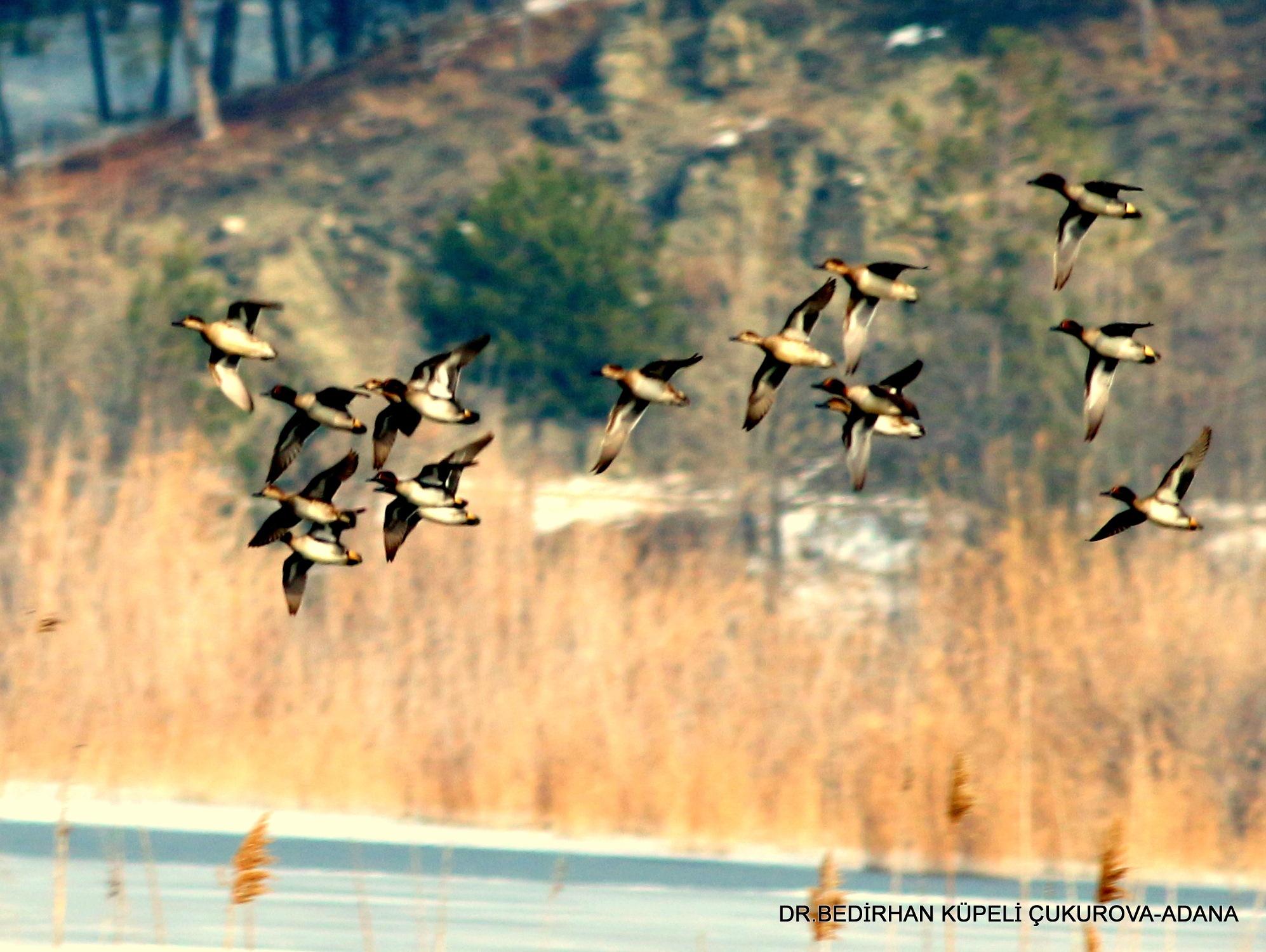 Flight on the lake.... by Bedirhan Küpeli
