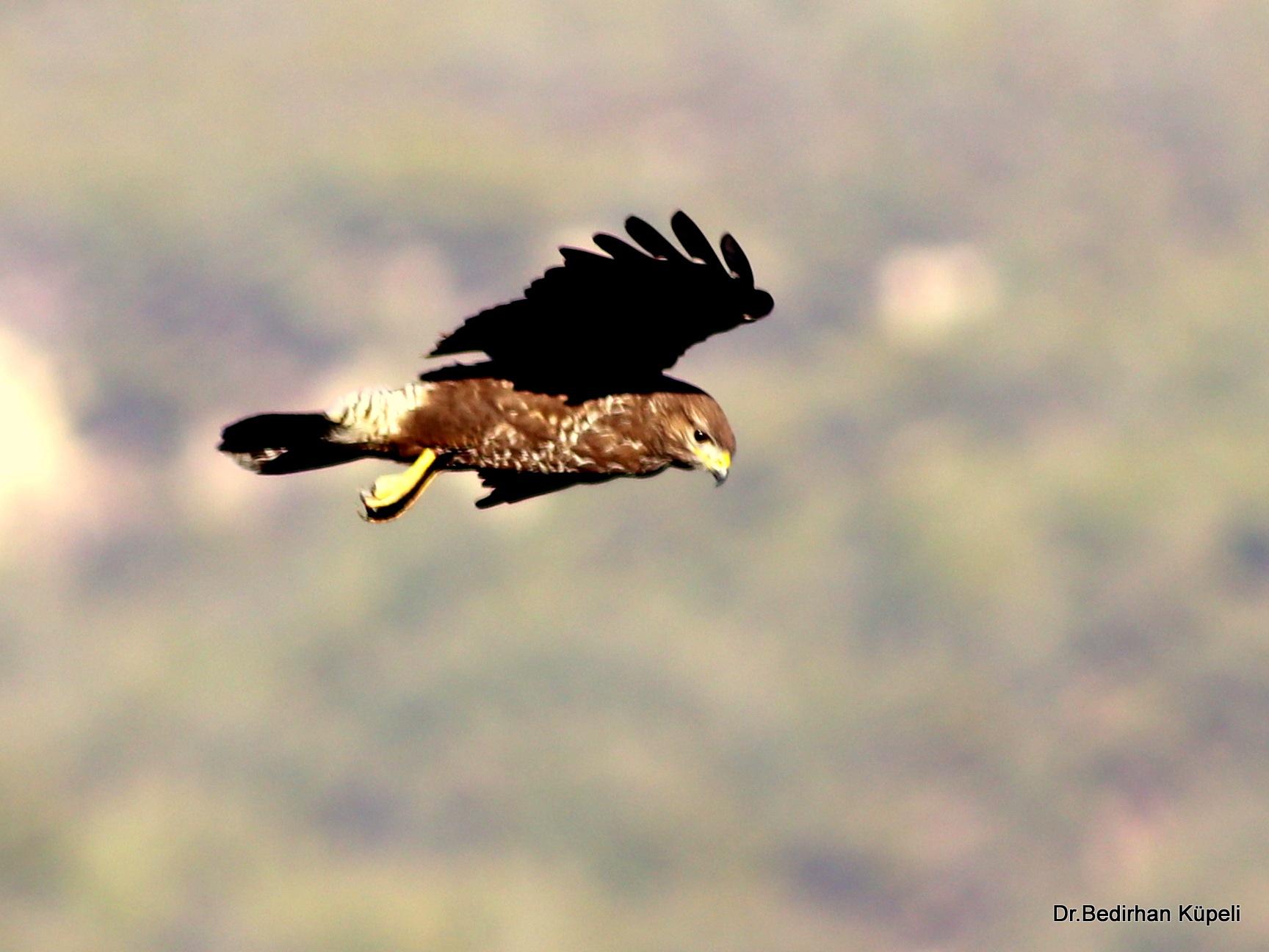 Predator Flight.... by Bedirhan Küpeli