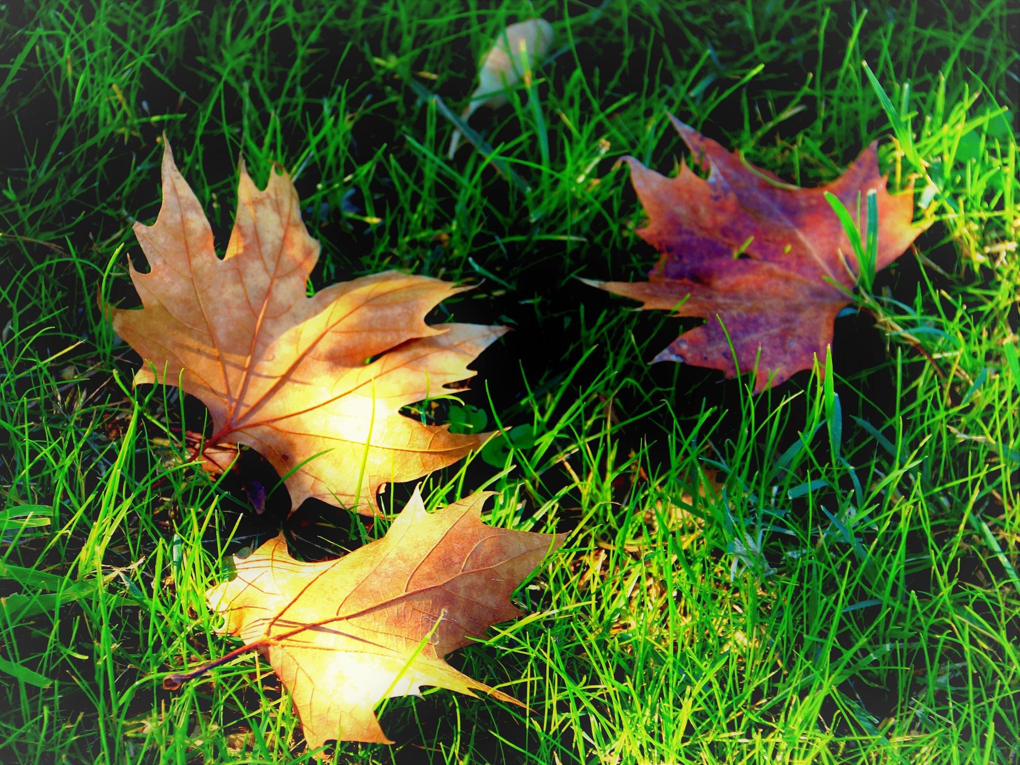 5971...Autumn... by Bedirhan Küpeli