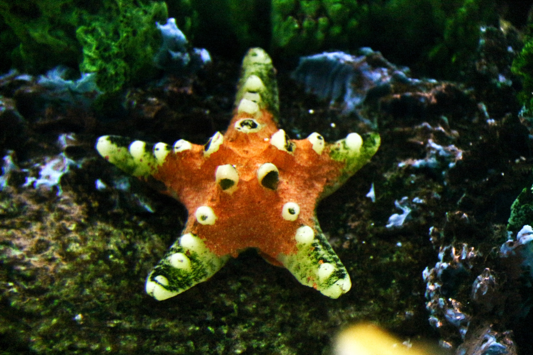 Starfish... by Bedirhan Küpeli