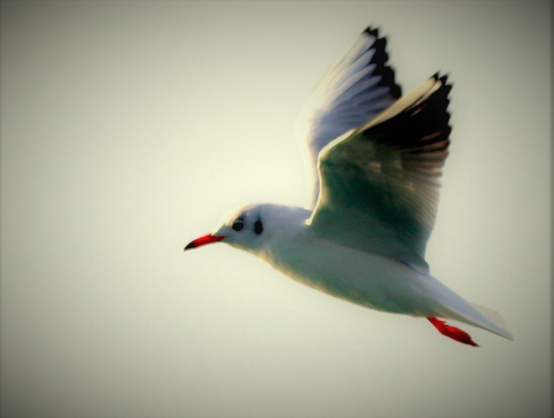 6999... Flight... by Bedirhan Küpeli