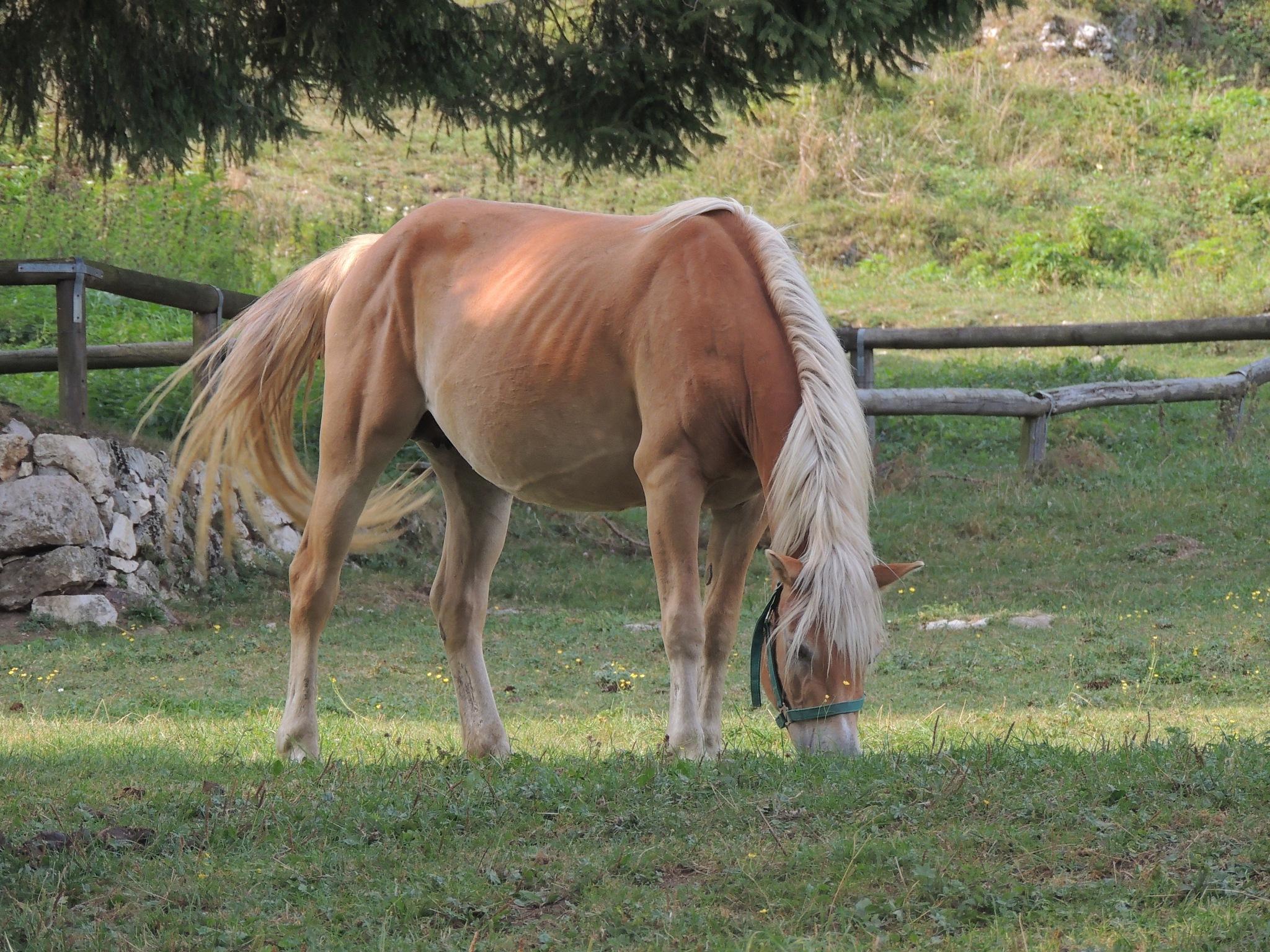Horse in a farm by Damiano Mozzato