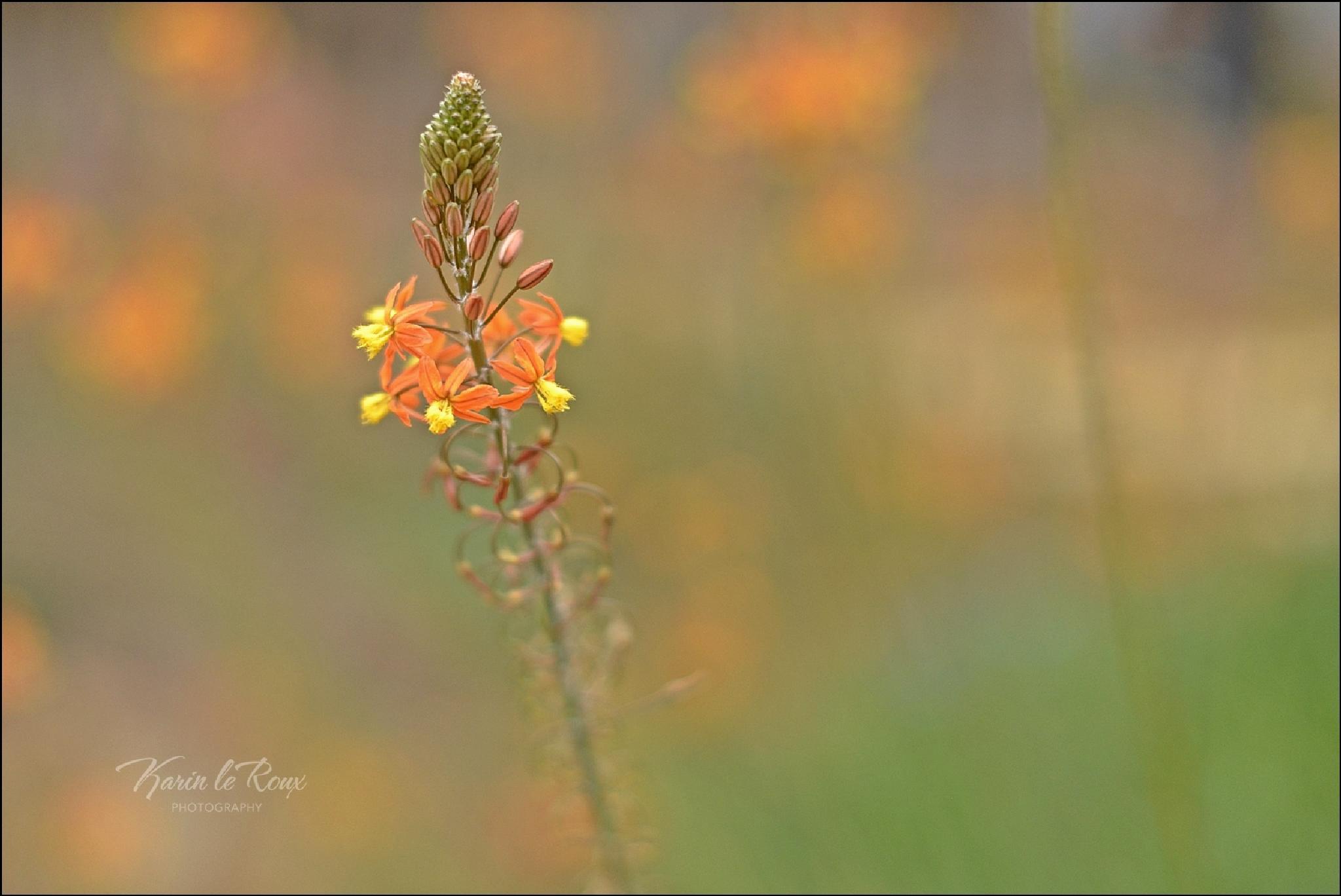 Orange by karin.leroux.94