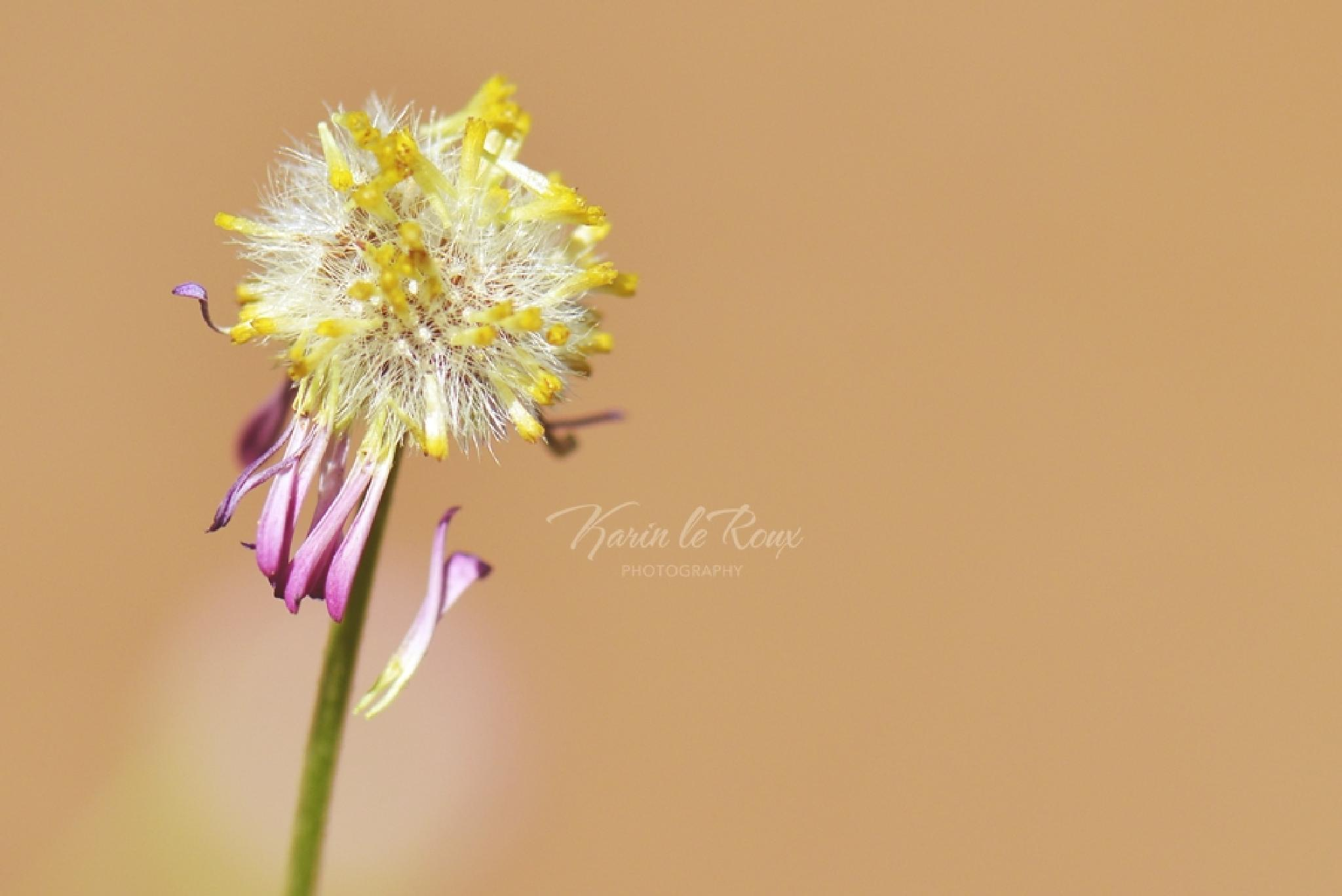 End of my flower... by karin.leroux.94