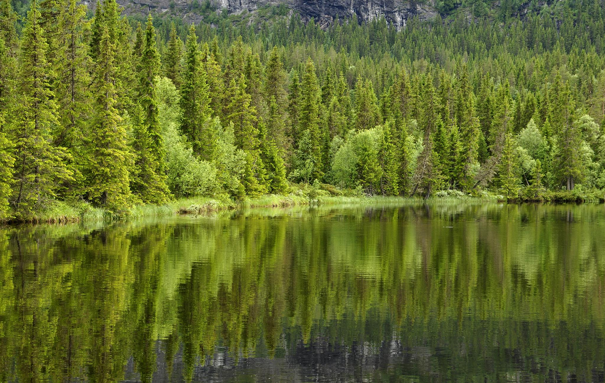 Calm lake reflection by Conny Sjostrom