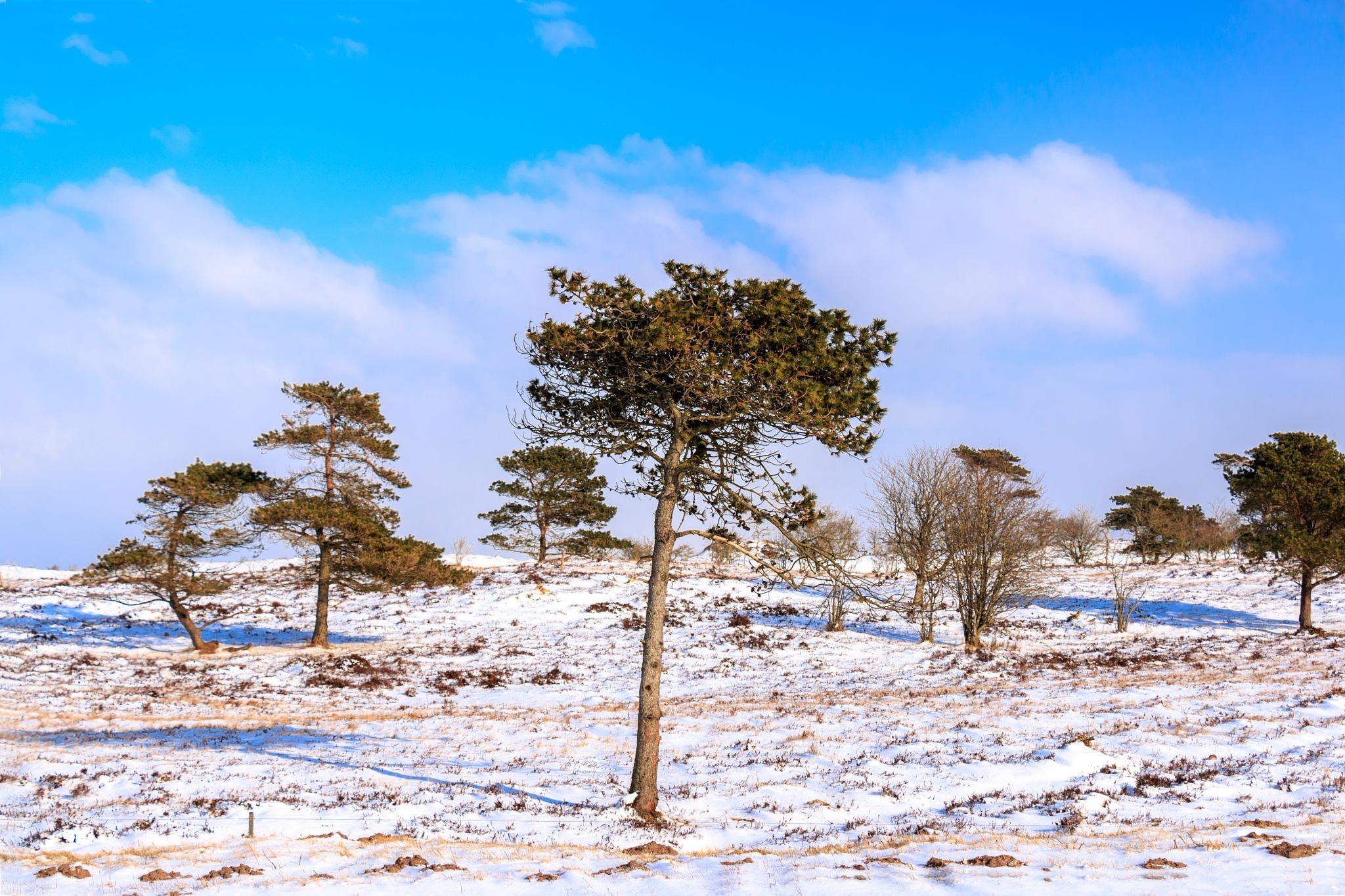 Winter by Karsten Larsen