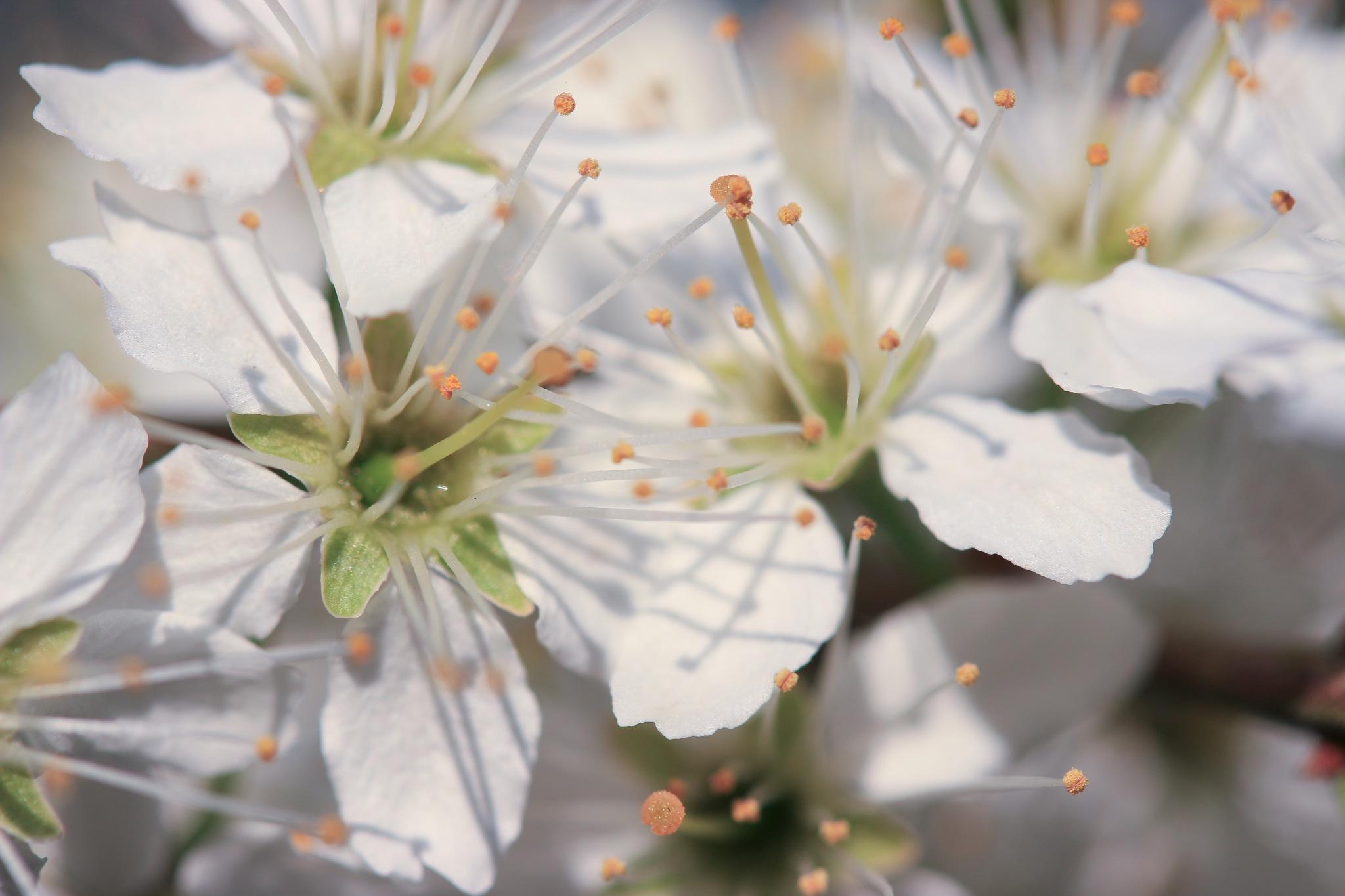 closeup by Karsten Larsen