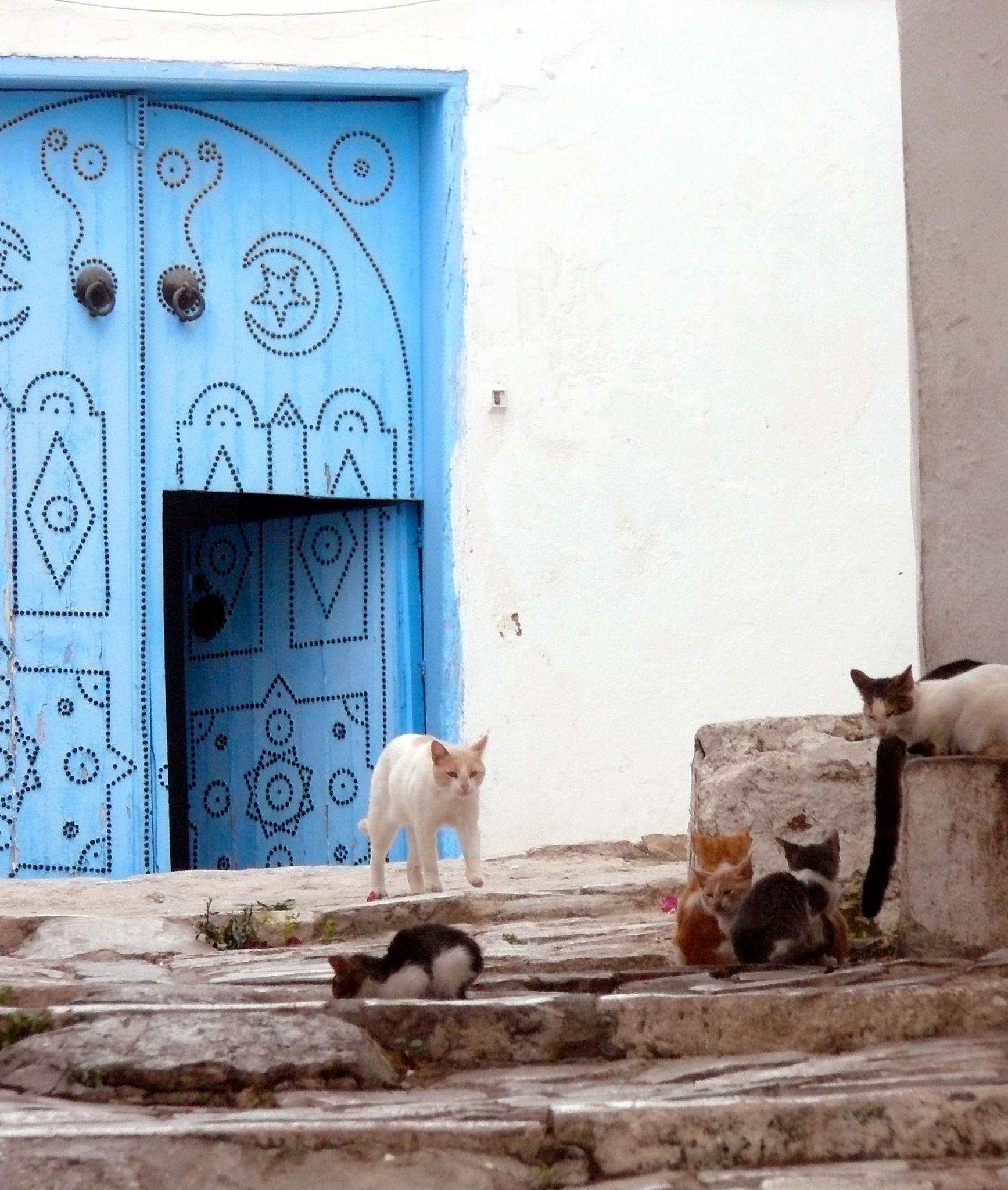 Moroccan Kitties   by jasmine.sanders.3114